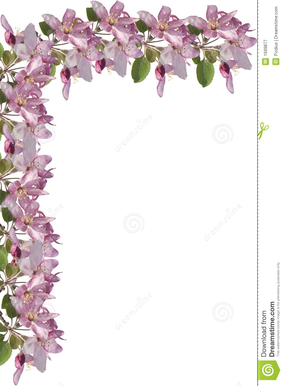 Apple Blossom Border Royalty Free Stock Photography - Image: 1699877