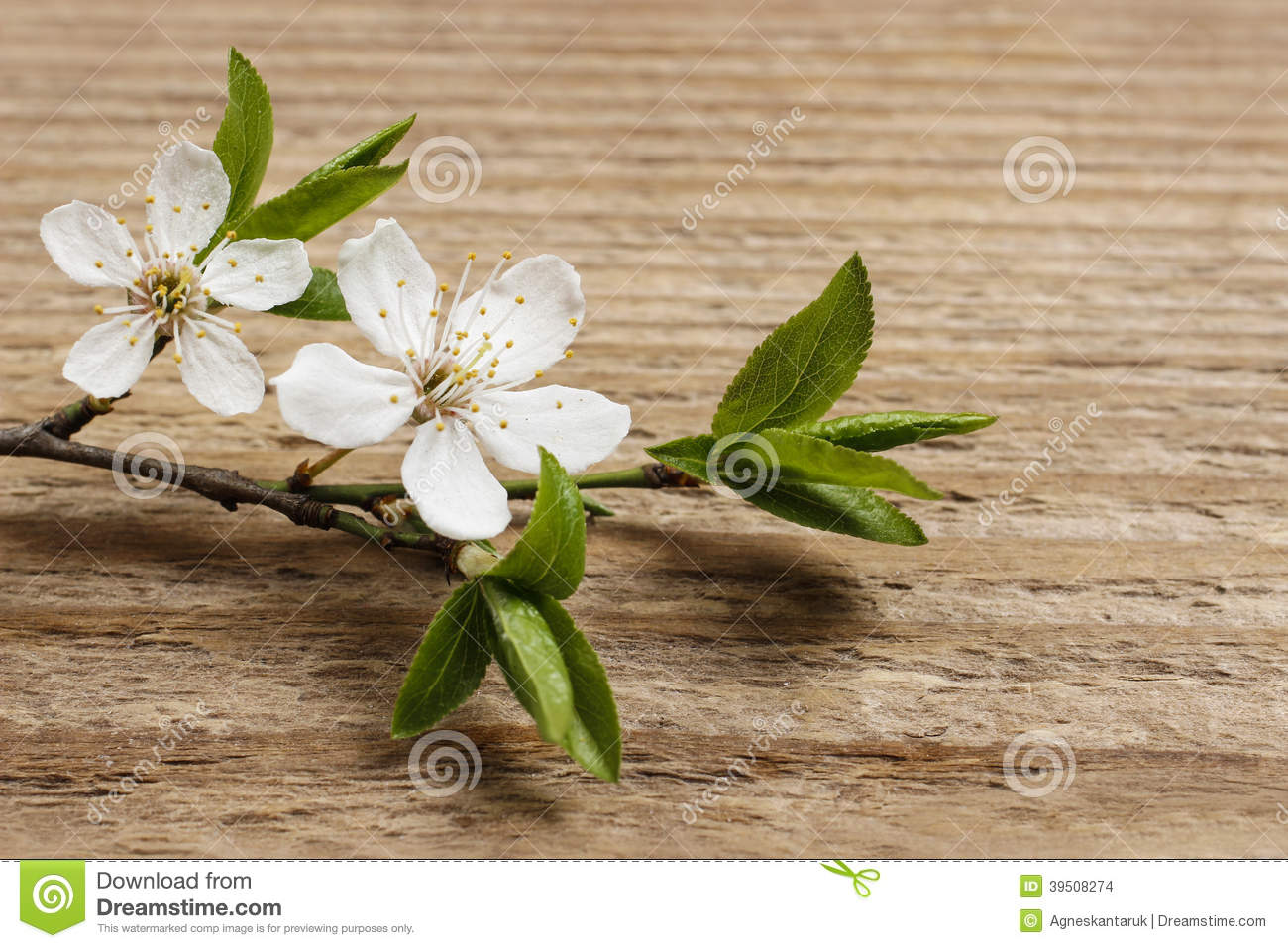 Apple blossom on wooden background