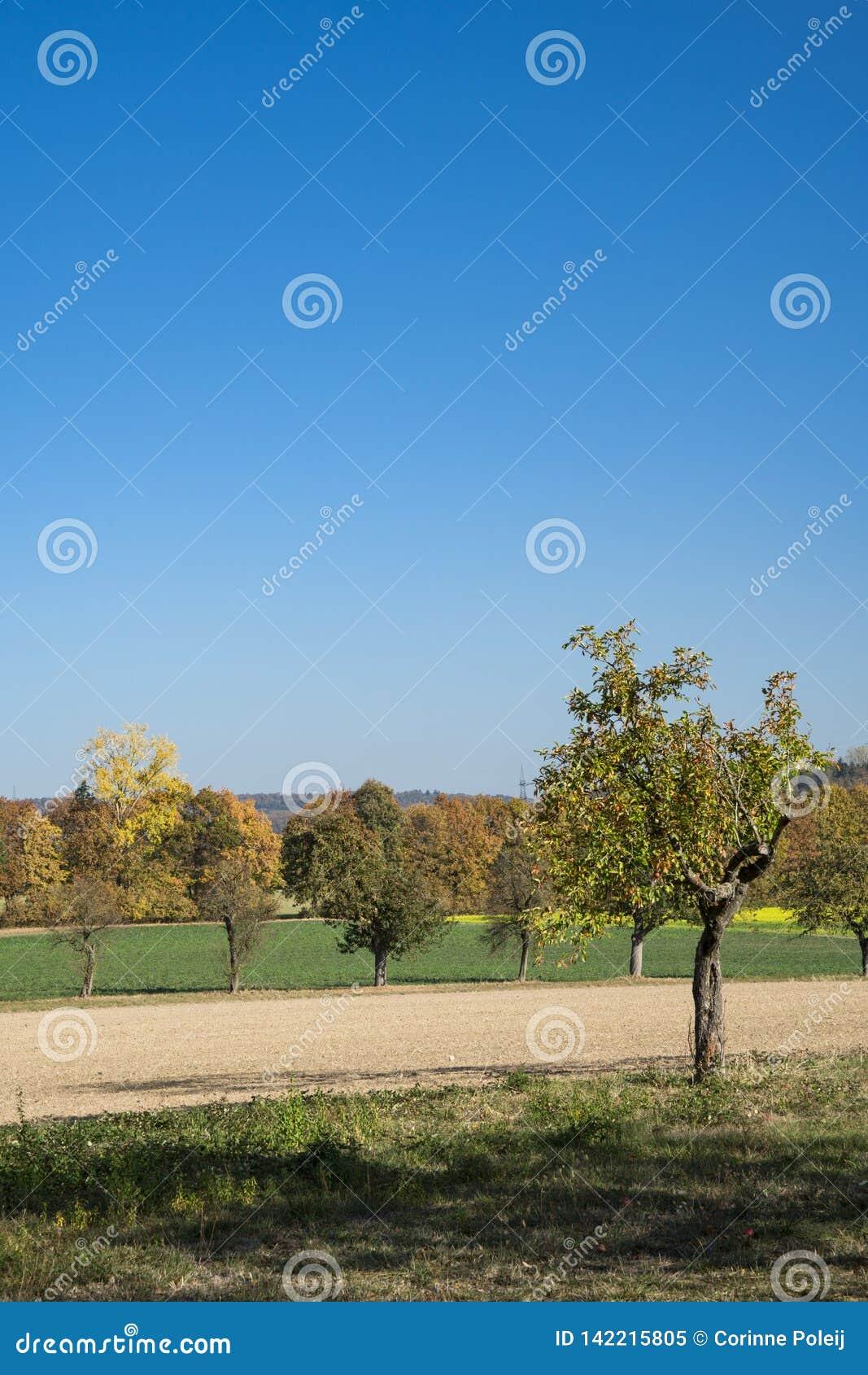 Apple-boom in landschap dichtbij Wiesloch, Duitsland Op route geroepen Fachwerkstrasse Tegen blauwe hemel