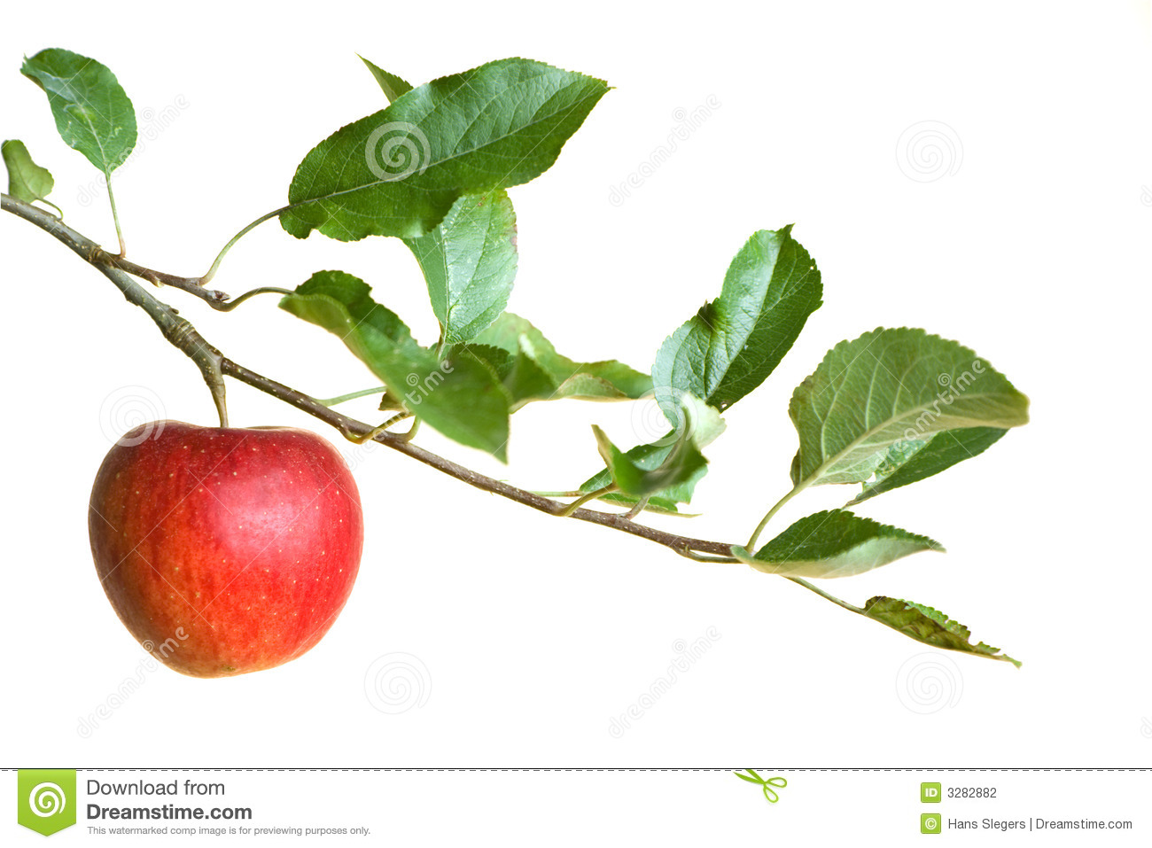 Apple on a branch isolated on a white background with copy-space.