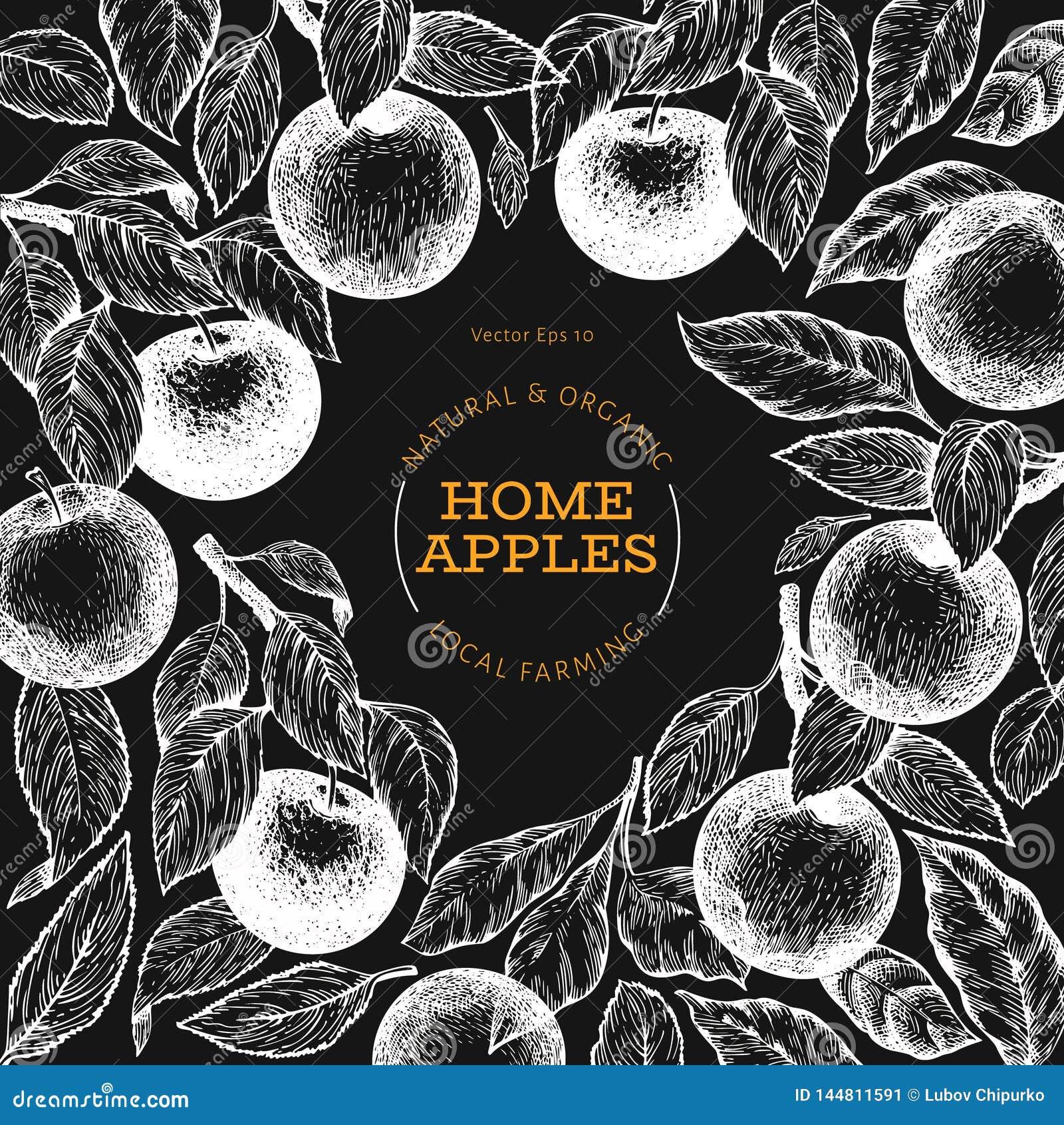 Apple branche design template. Hand drawn vector garden fruit illustration on chalk board. Engraved style fruit frame. Retro