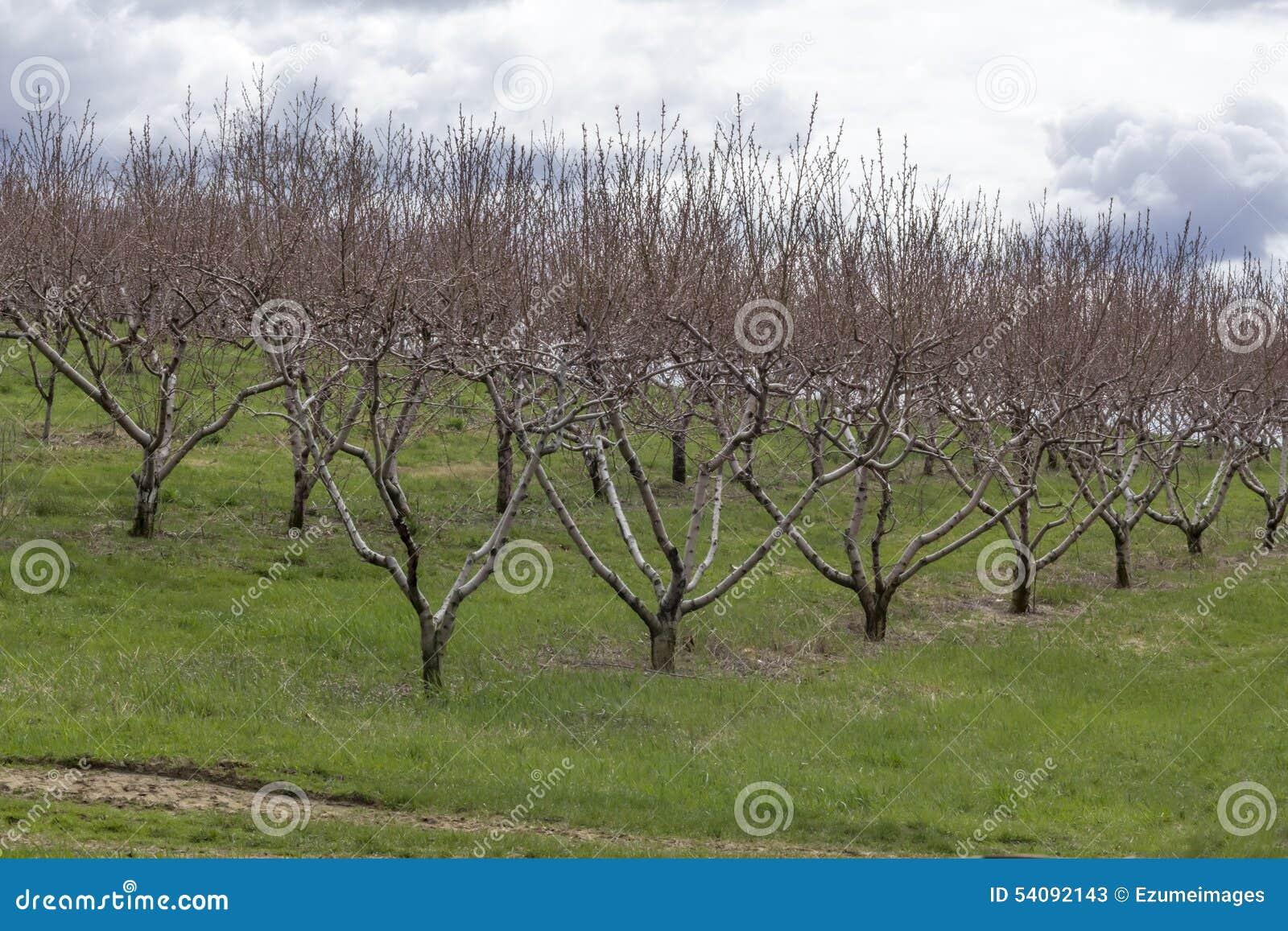 Apple-de Boomgaardlente