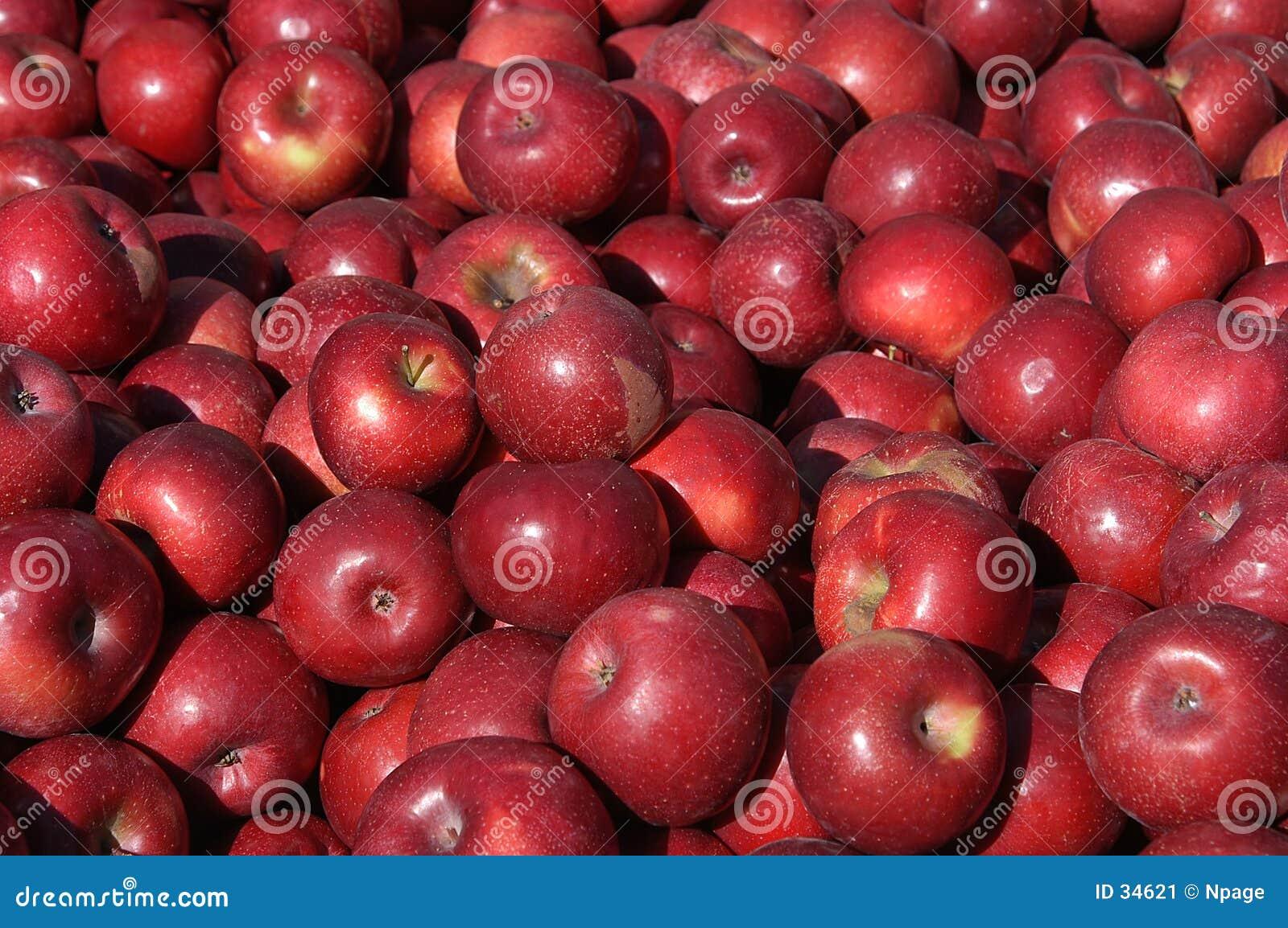 Download Apple-Ernte stockbild. Bild von früchte, frucht, landwirtschaft - 34621
