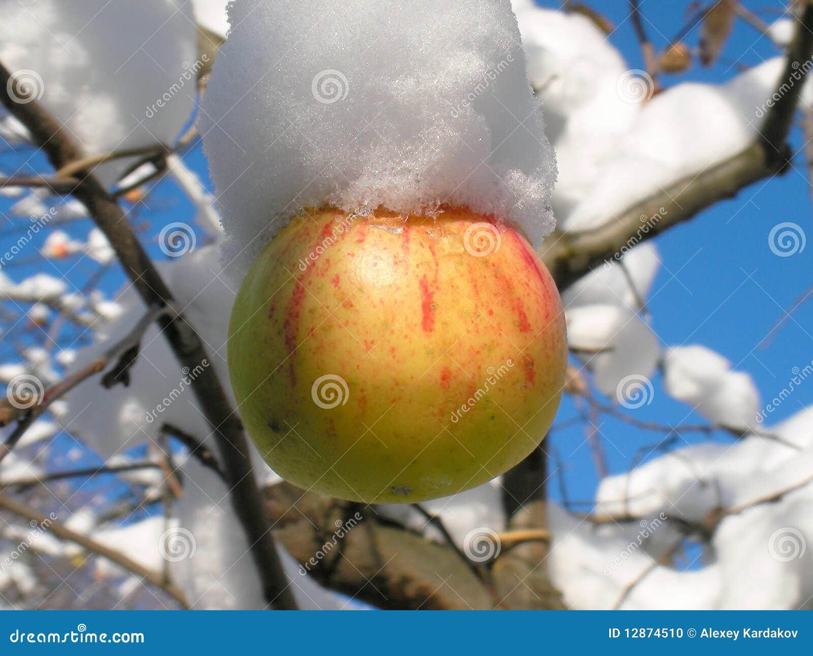 Apple et neige
