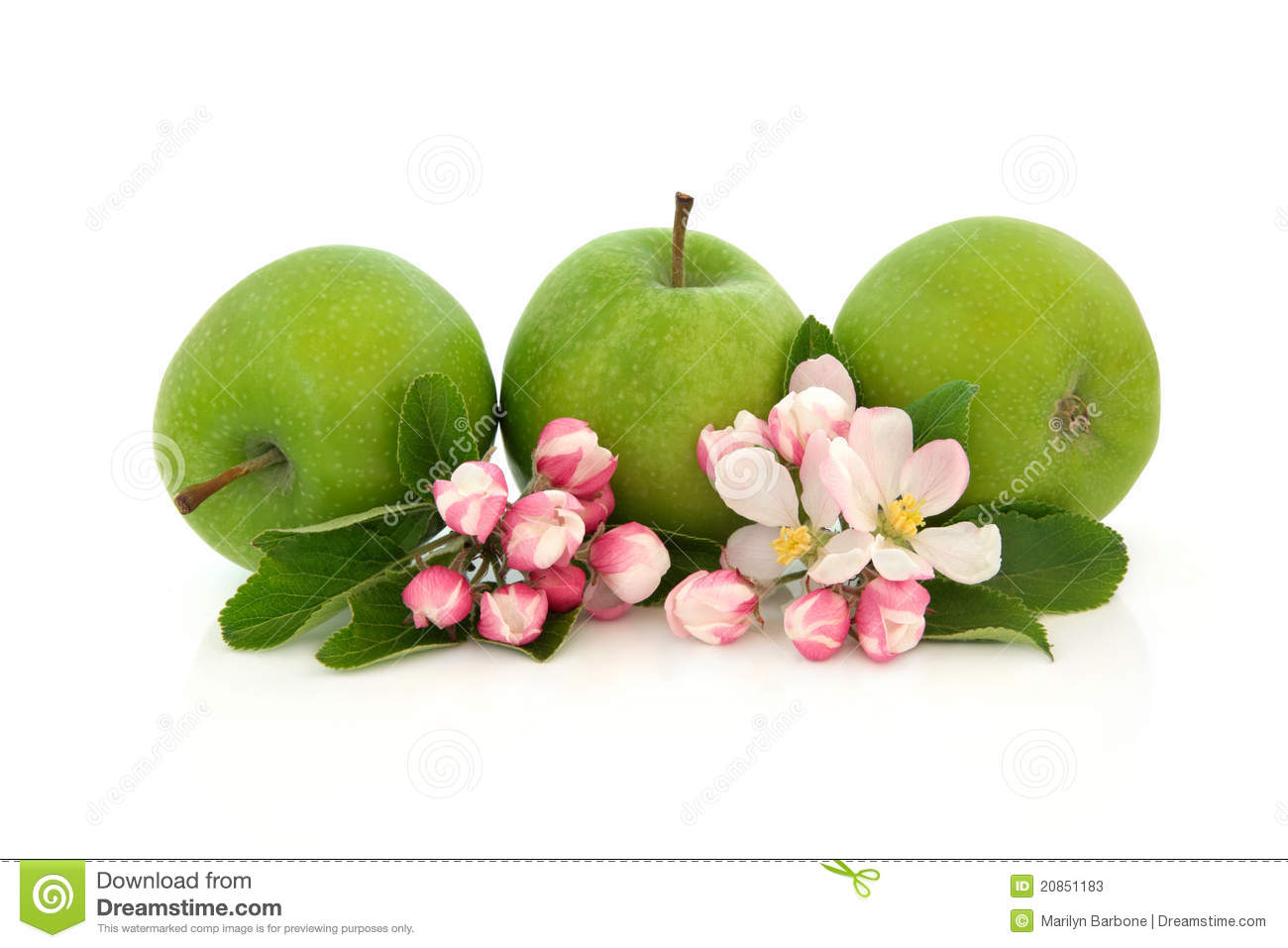 Royalty Free Stock Photo. Download Apple Fruit And Flower ...