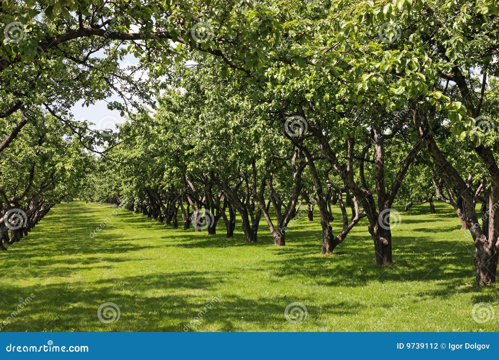 Apple Garden Stock Photography Image 9739112