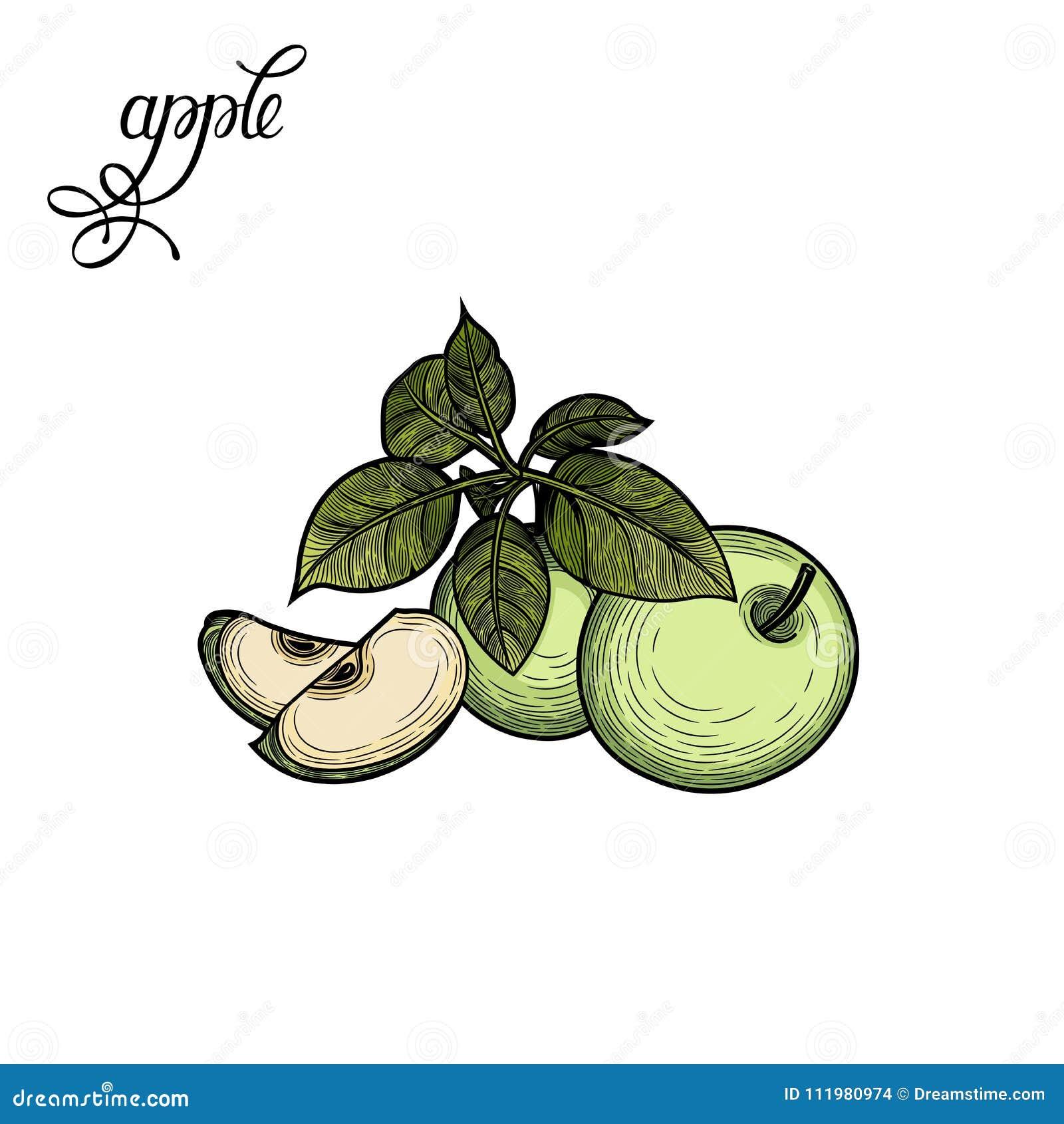 Apple Illustrazione di vettore