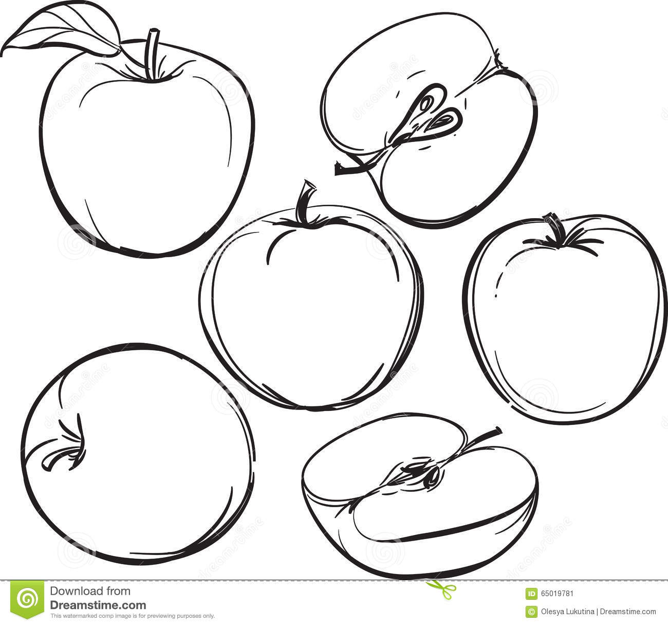 Stock Vector: Apple. Line drawing of apples. On a white background ...