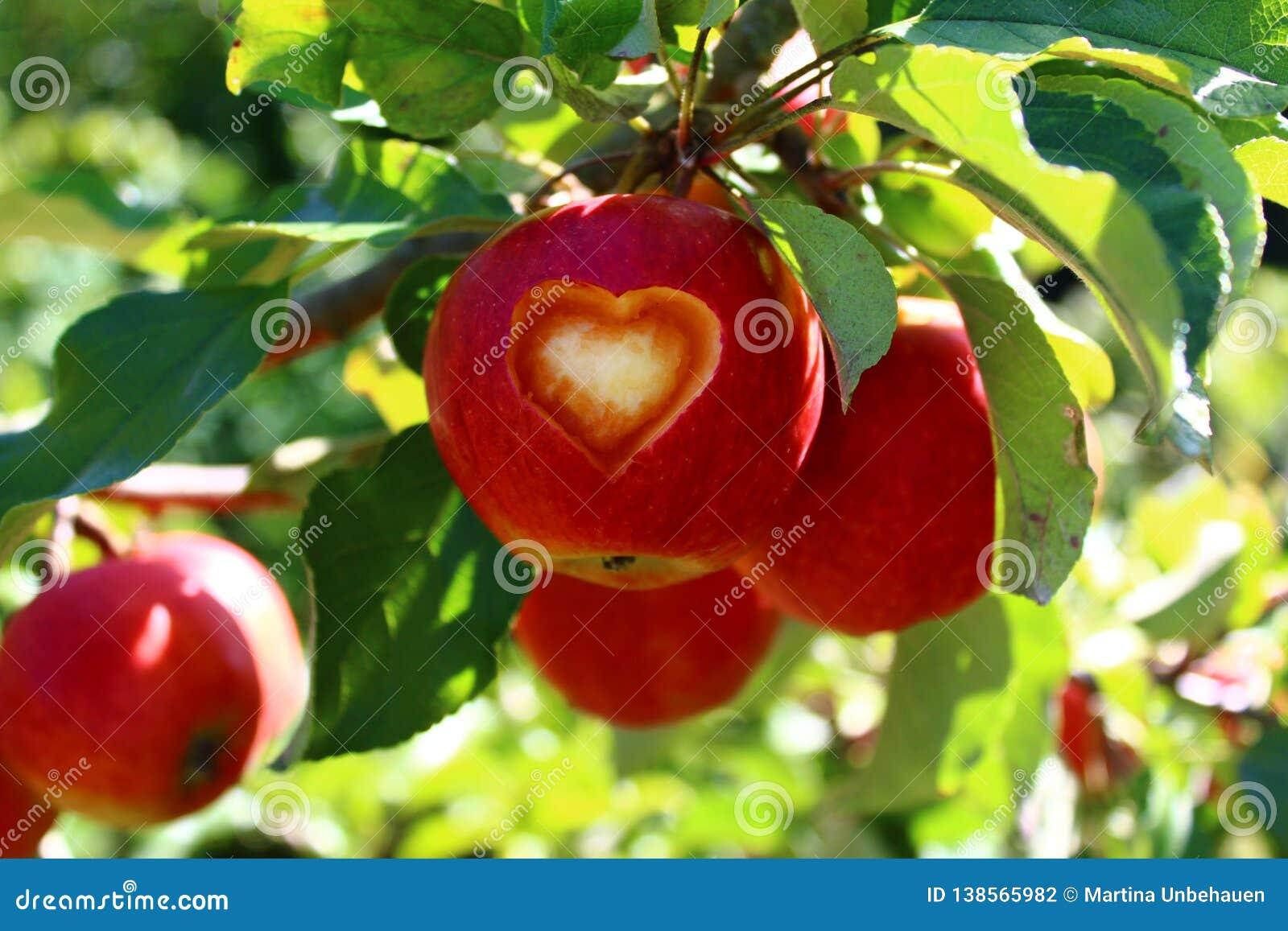 Apple mit einem Herzen auf einem Baum