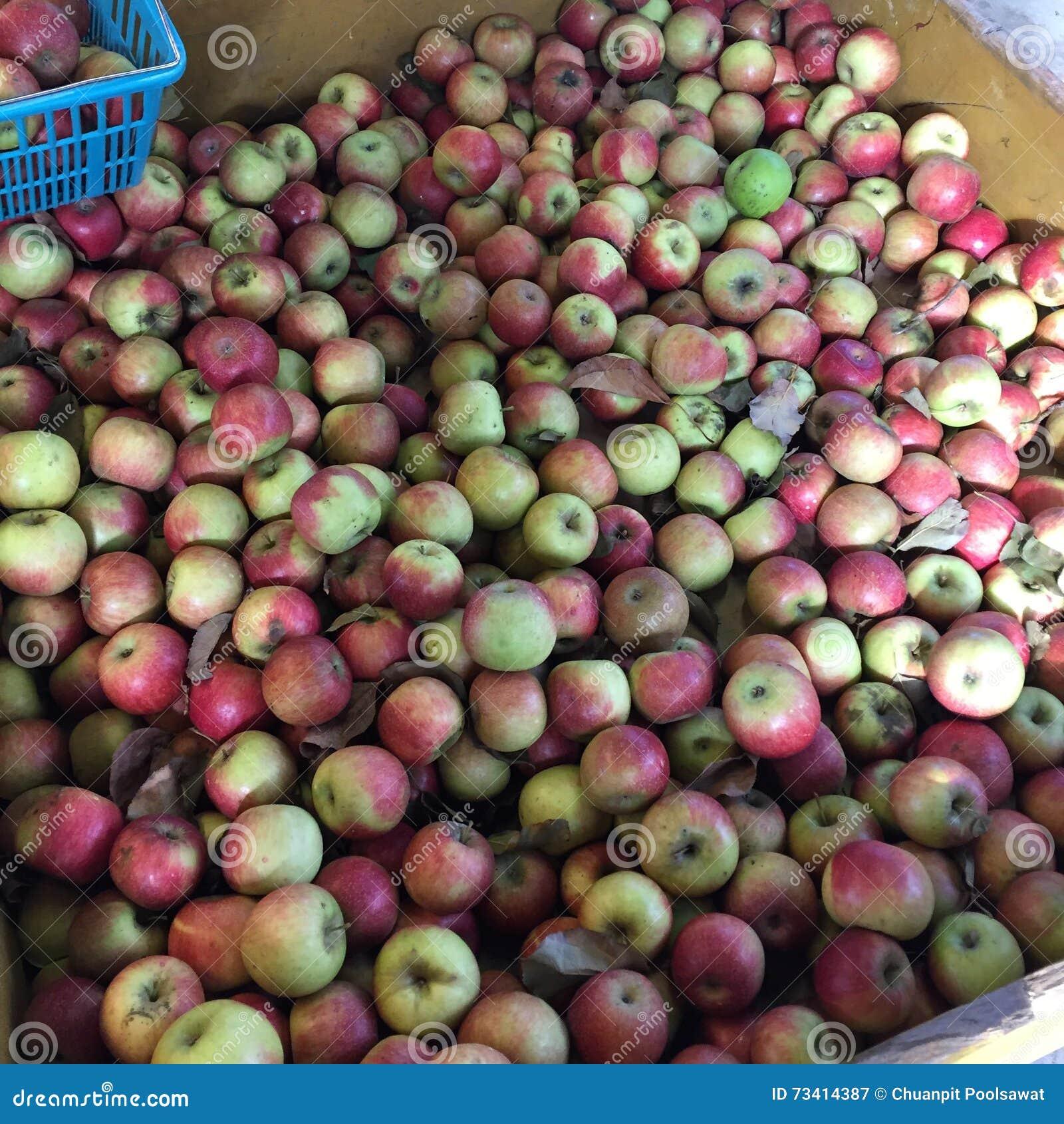 Apple Pick Up Farm Stock Image Image Of Apple Factory 73414387