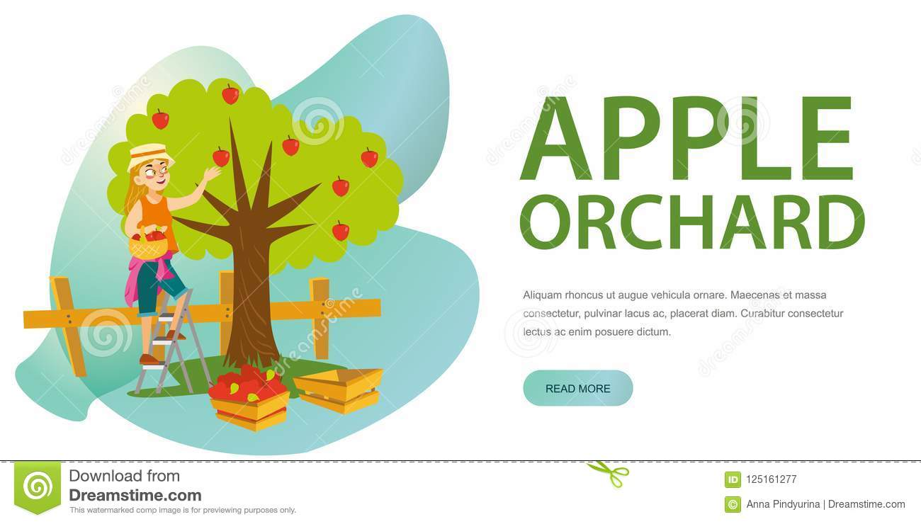 apple picking horizontal banner apple picking horizontal flat colorful banner vector illustration cartoon young woman standing