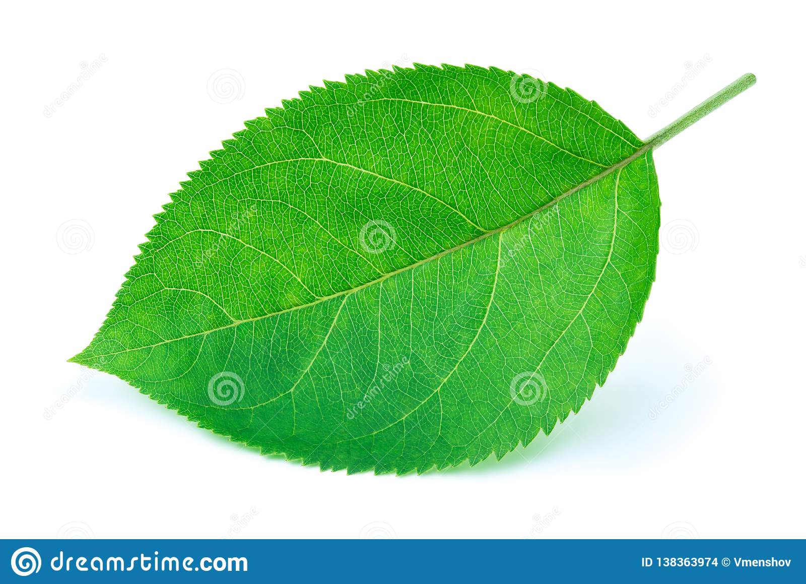 Apple poussent des feuilles d isolement sur le blanc