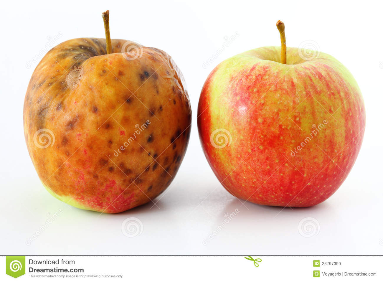 Apple spoiled on white Healthy and rotten apples