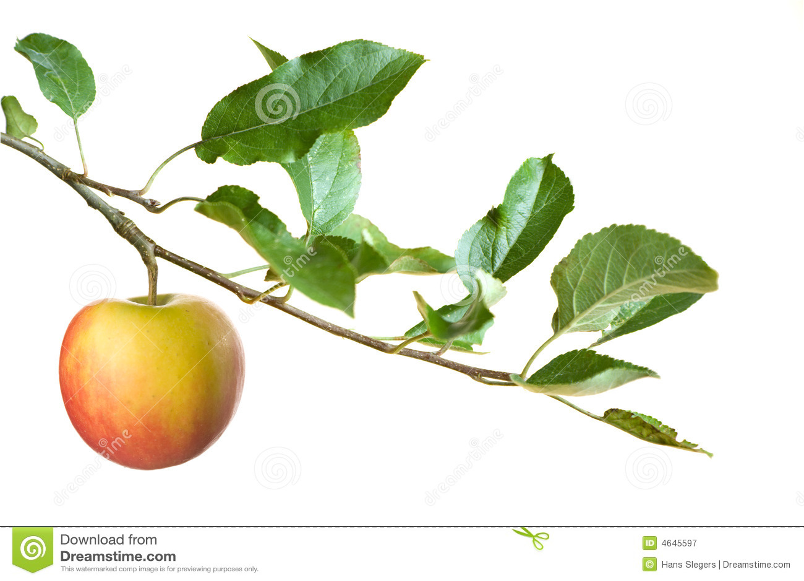 Apple sur un branchement