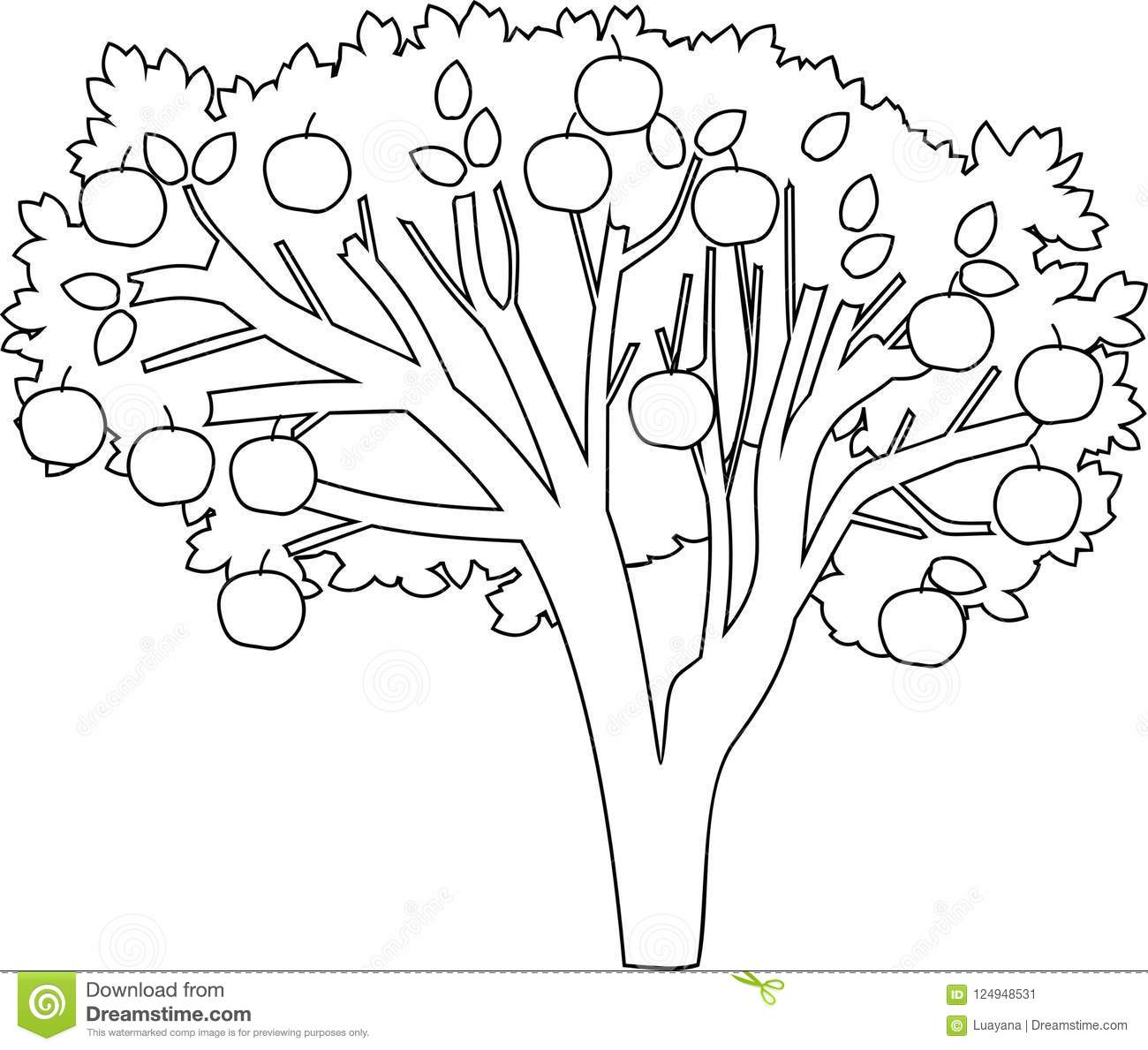 Apple Tree Coloring Page Stock Vector Illustration Of Flora 124948531
