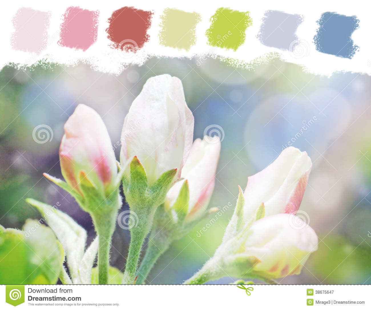 Apple Tree Flower Buds Color Palette Stock Image - Image of grow ...
