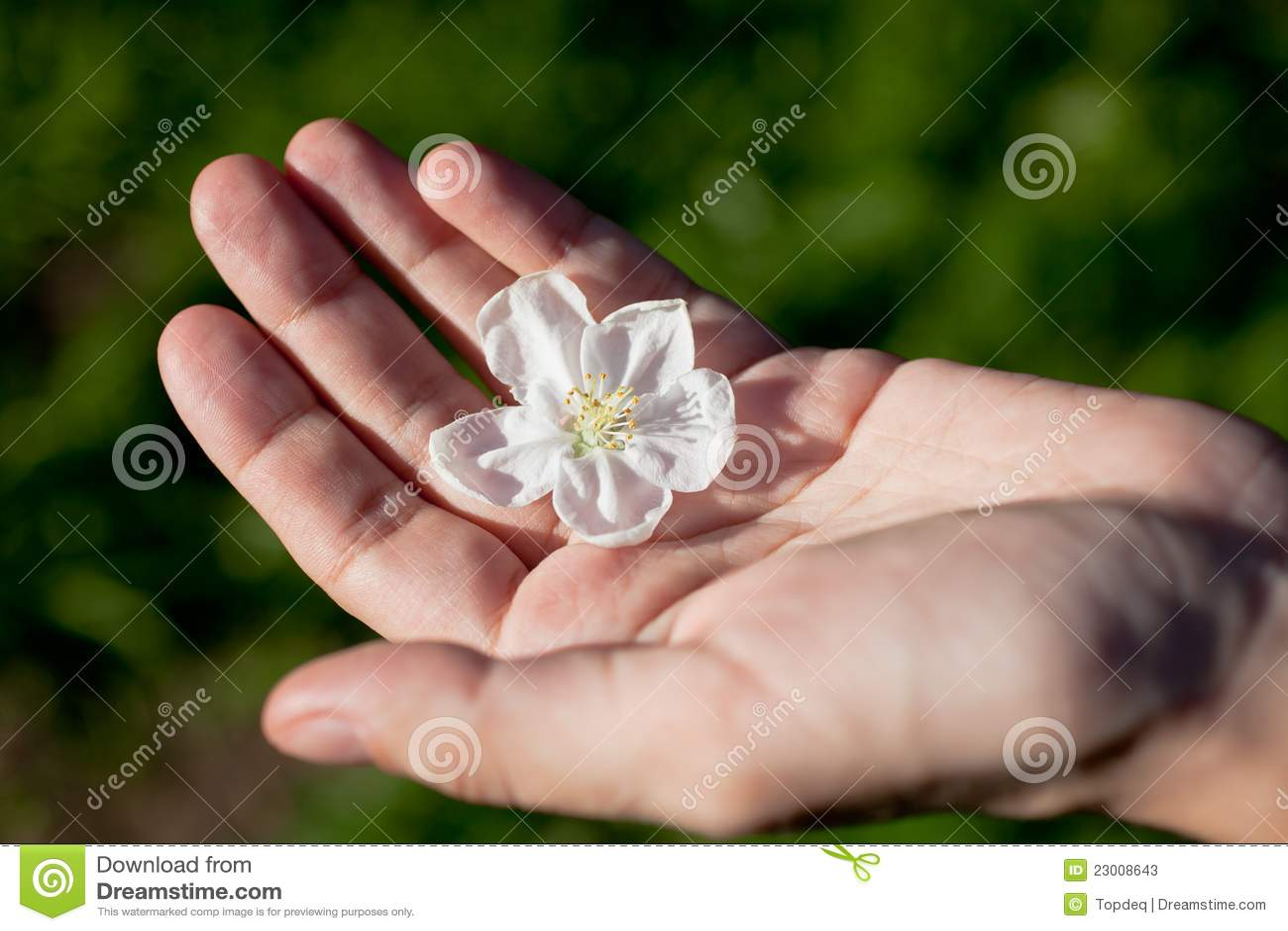 Фото цветка на ладони
