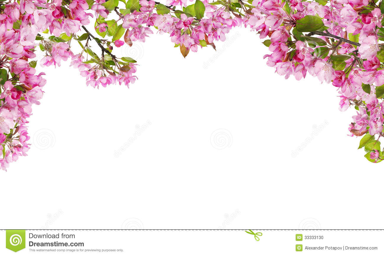 apple tree pink flower branches half frame stock photo. Black Bedroom Furniture Sets. Home Design Ideas