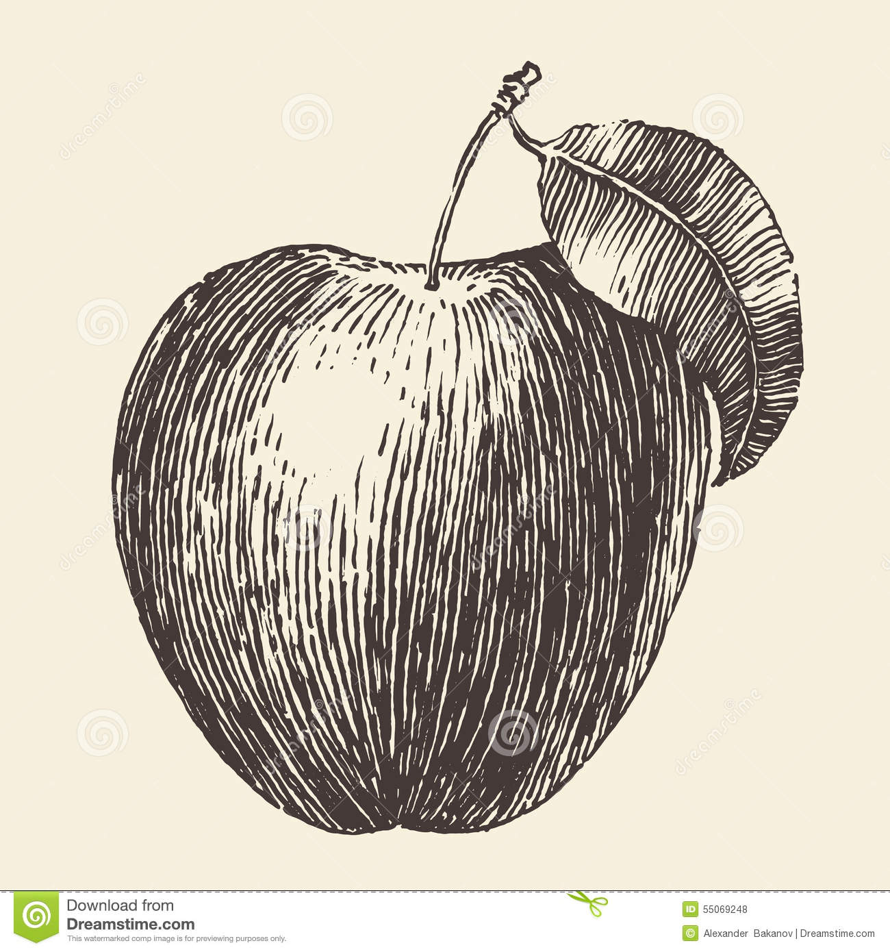 Vintage Illustration Apple Stock Photos and Images - alamy.com
