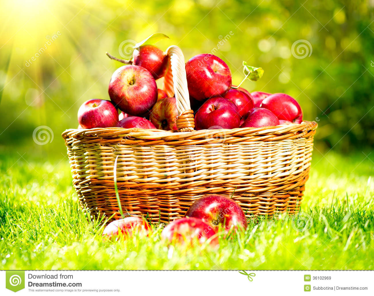 Apples In A Basket Royalty Free Stock Images Image 36102969