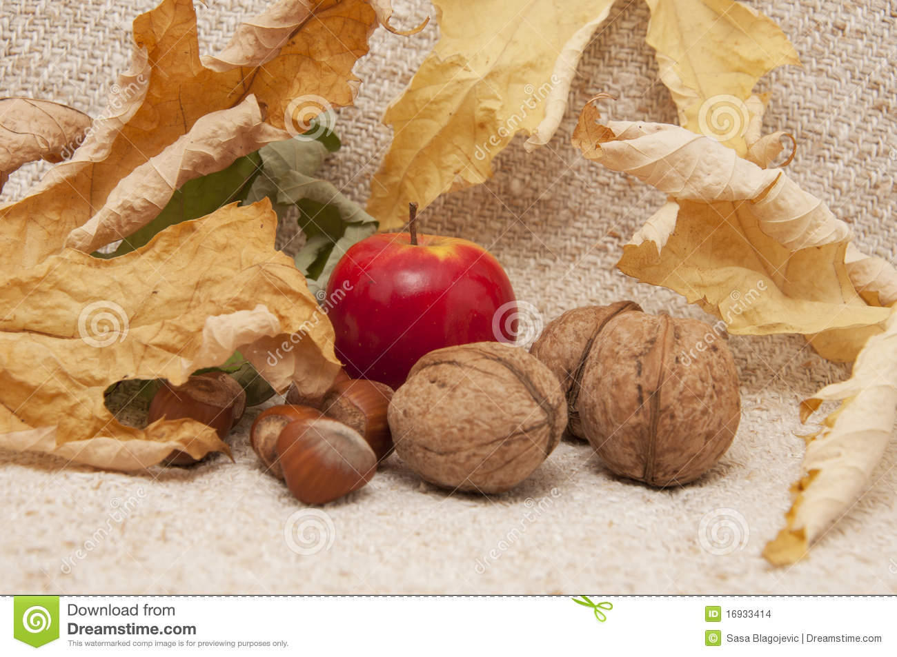Apples With Hazelnuts And Walnuts Stock Images - Image ...