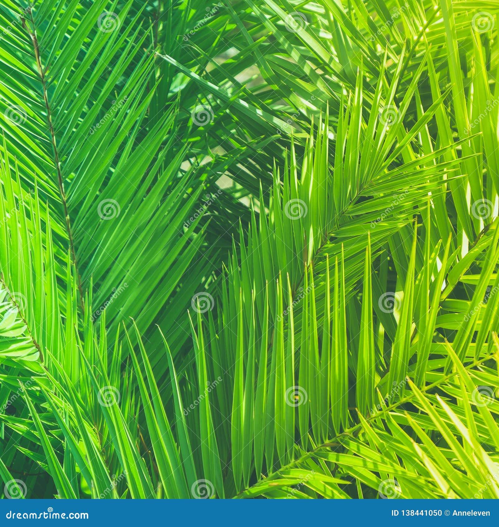 Appréciez un rêve tropical