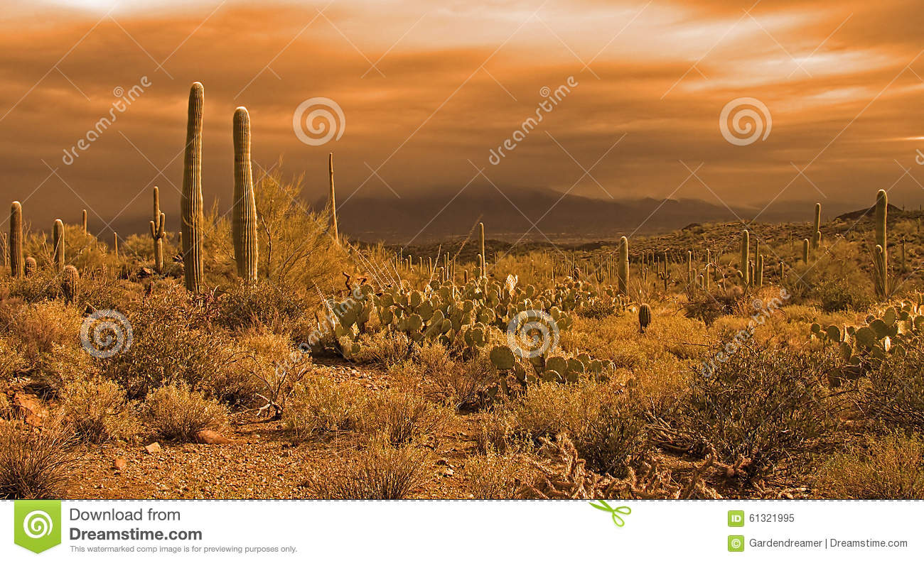 Approaching Desert Storm Stock Photo Image 61321995