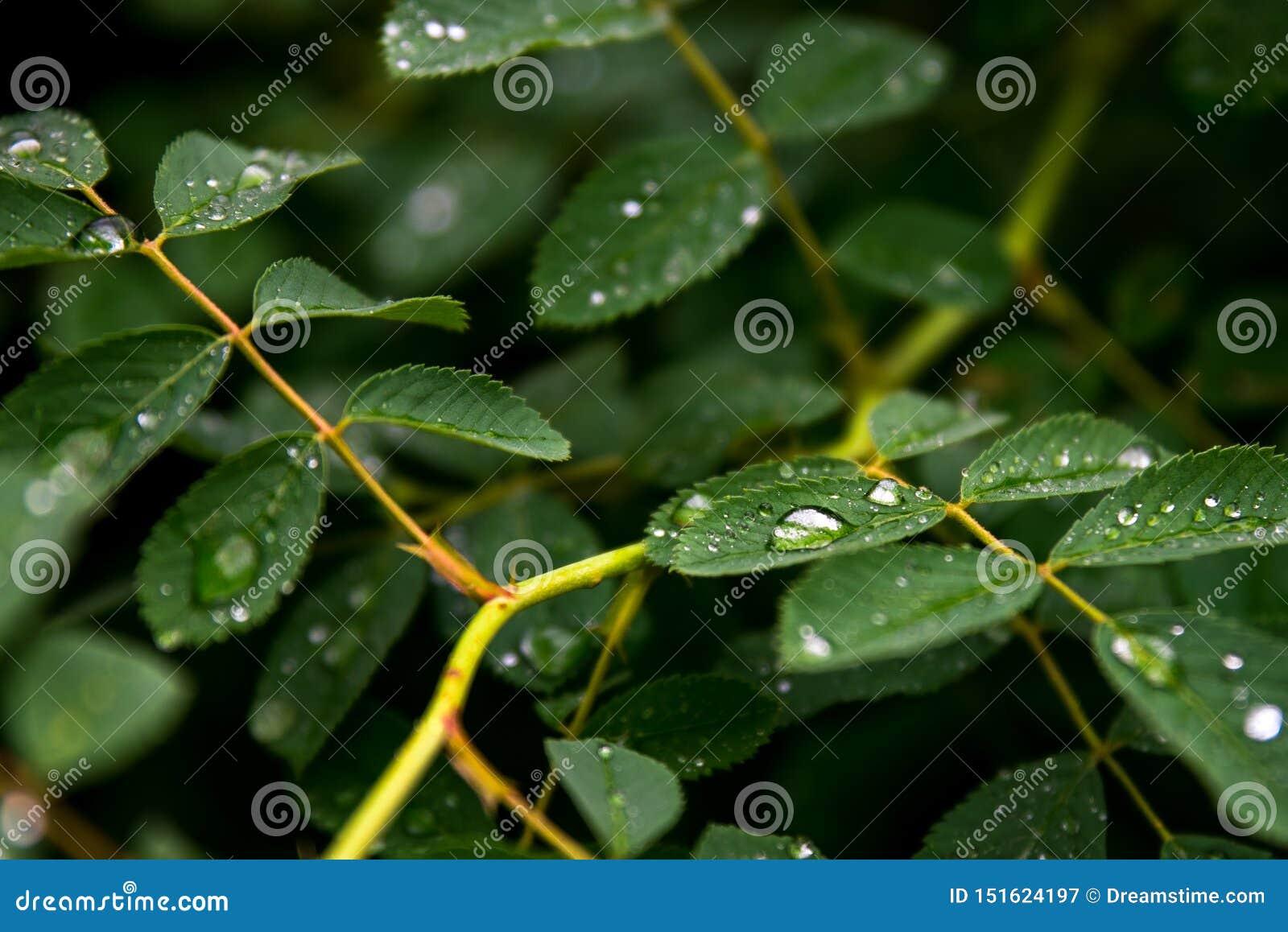 Apr?s la pluie