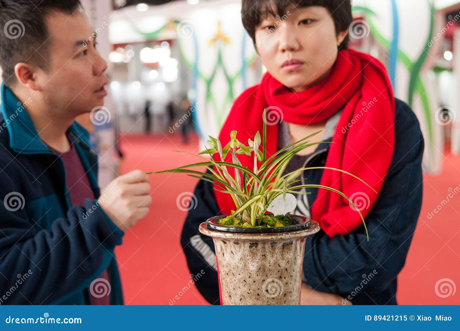 Apreciando orquídeas de florescência