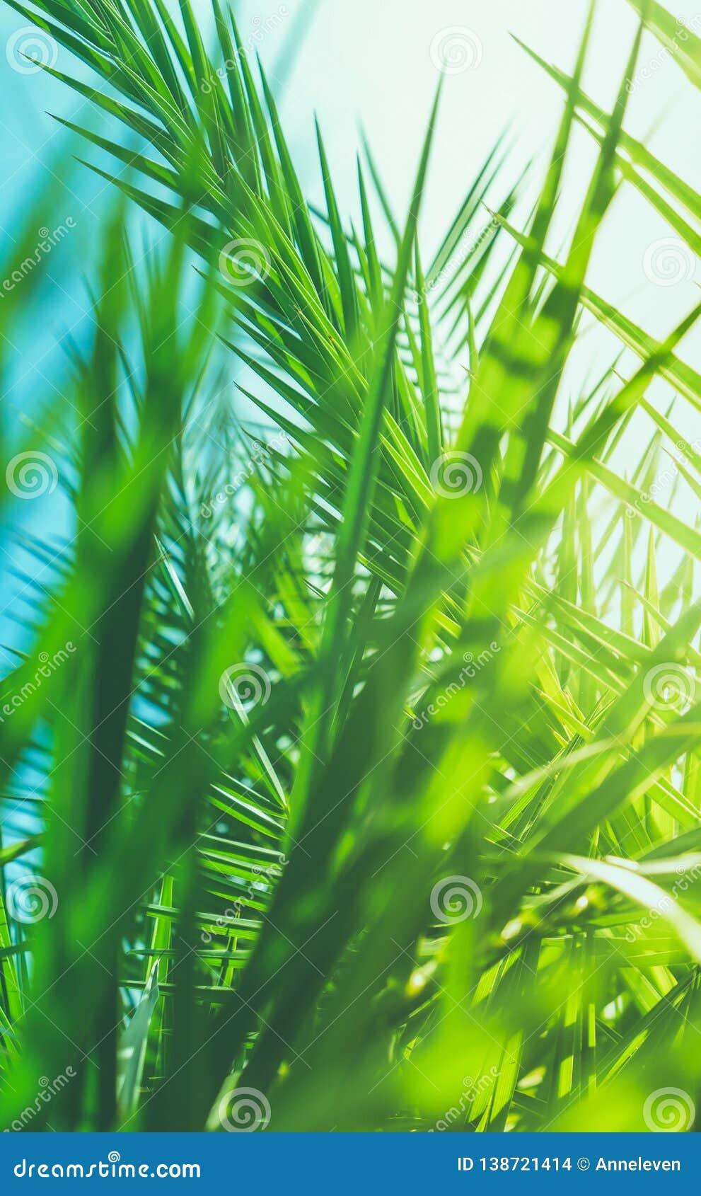Aprecie um sonho tropical