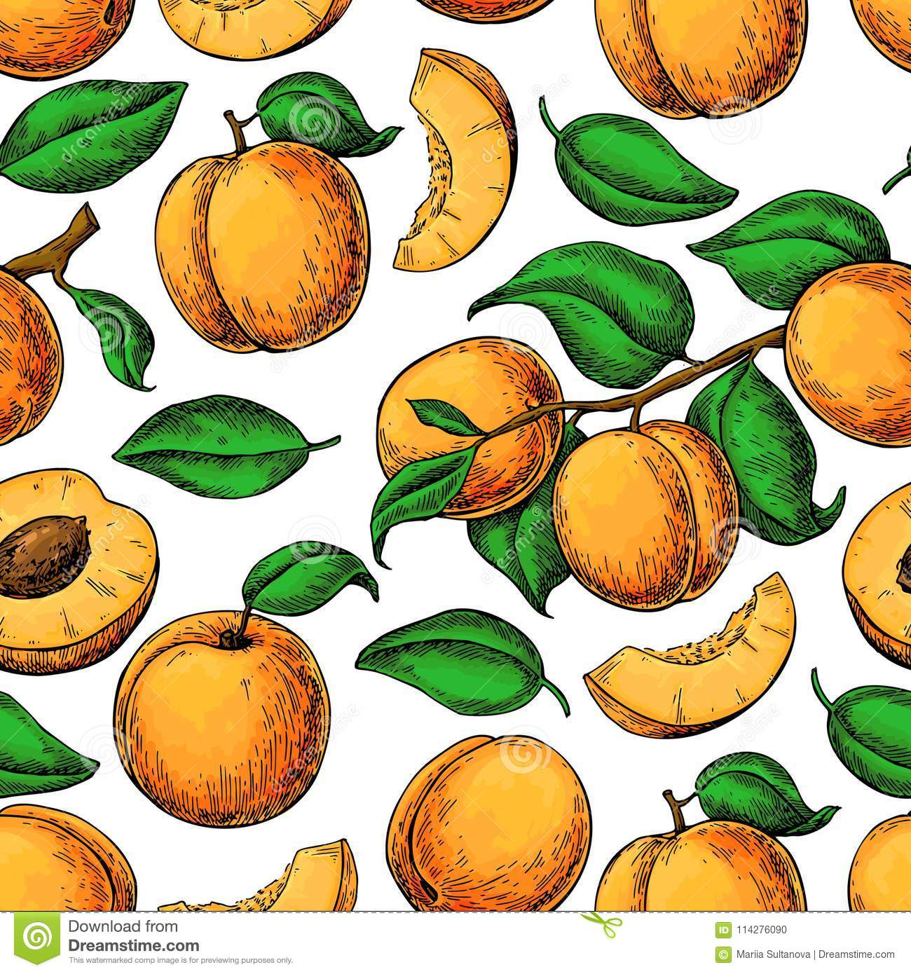 Apricot ColorApricot Seamless Pattern. Vector Drawing. Hand Draw ...
