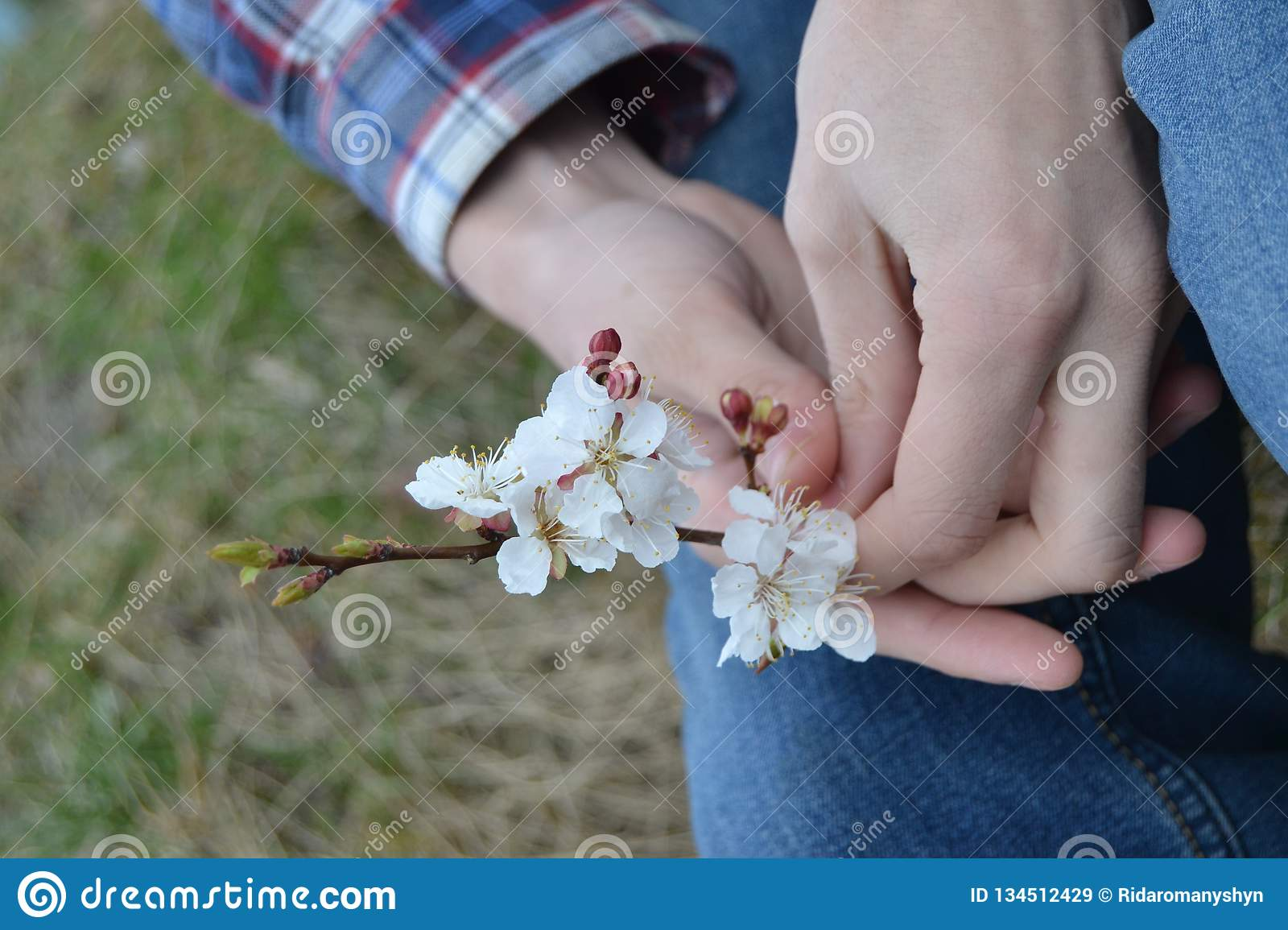 apricot flowers in the hands of a man. Spring flowers