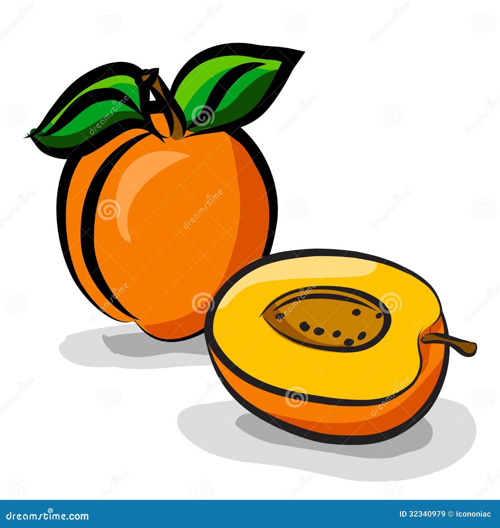 Apricot Fruits Sketch ...