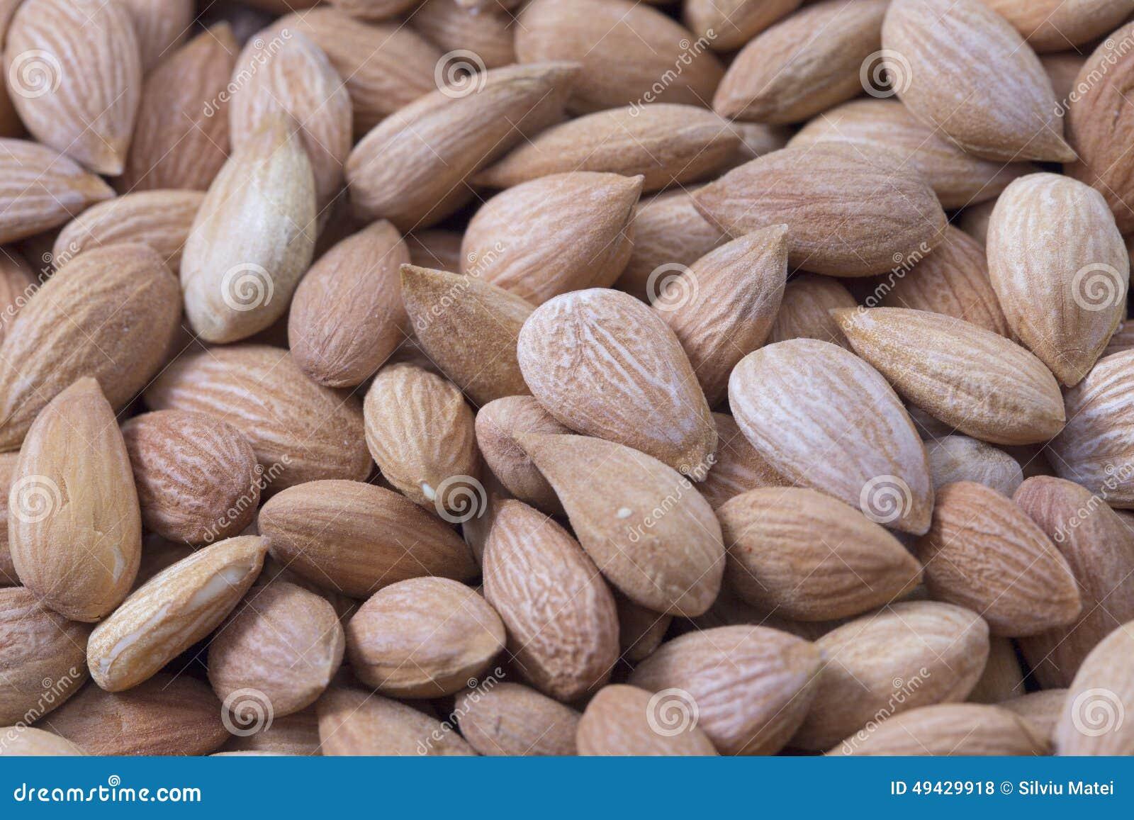 Apricot kernel