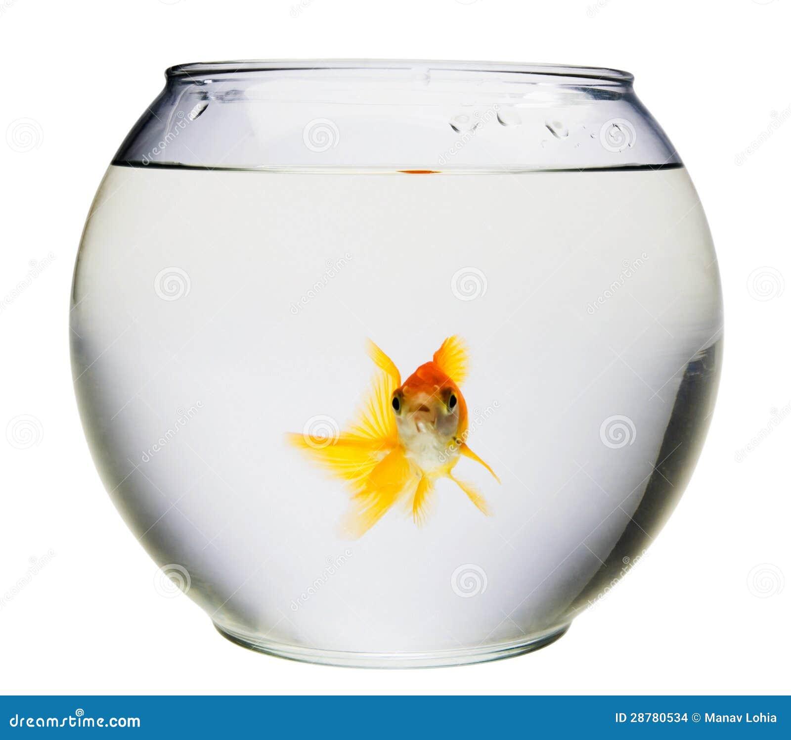 Aqu rio com peixe dourado imagens de stock imagem 28780534 for Bocal a poisson design