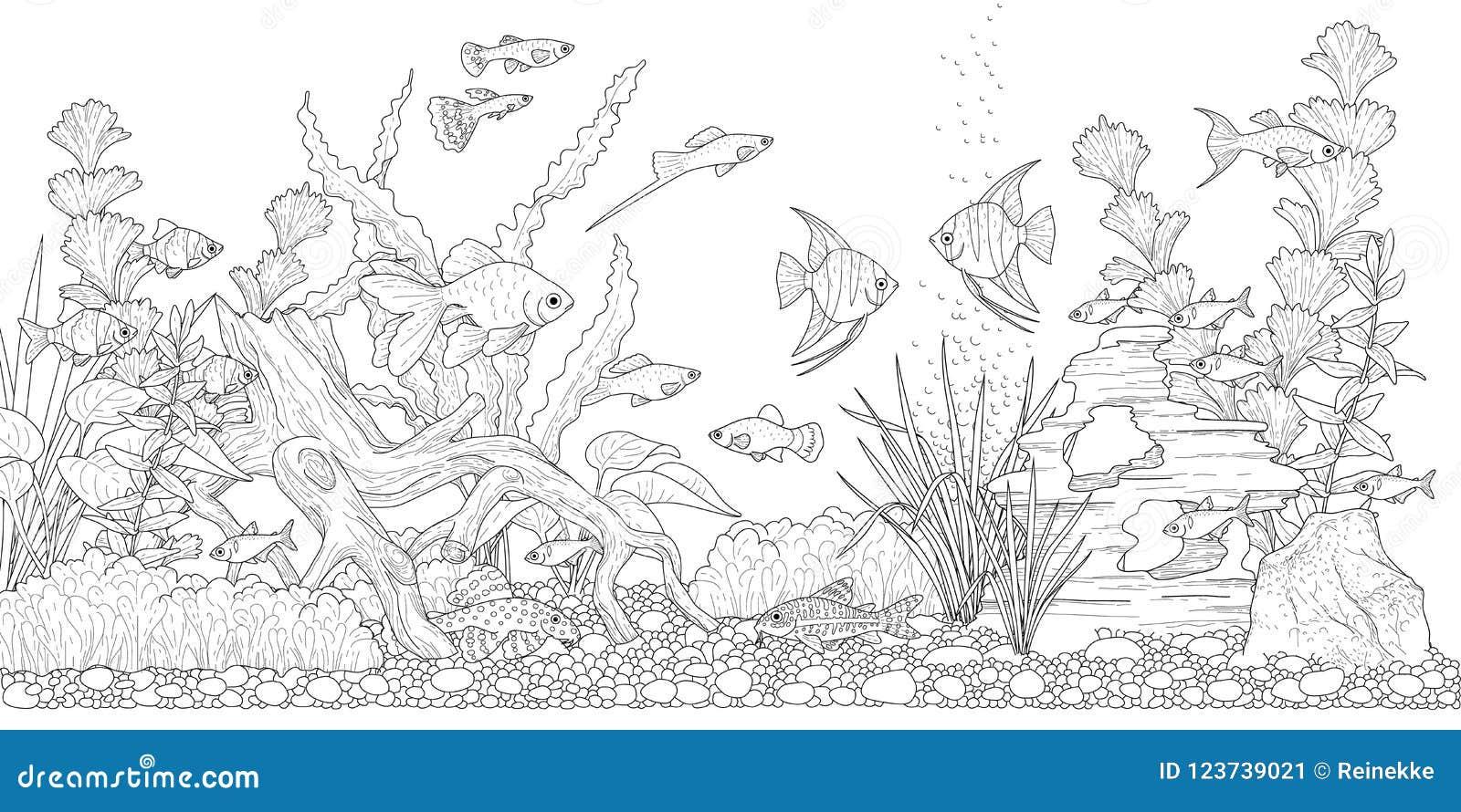 Aquario Para Colorir Ilustracao Do Vetor Ilustracao De Glassware