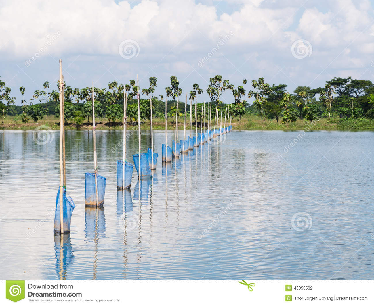 Aquaculture in myanmar stock photo image 46856502 for Is tilapia a bottom feeder fish