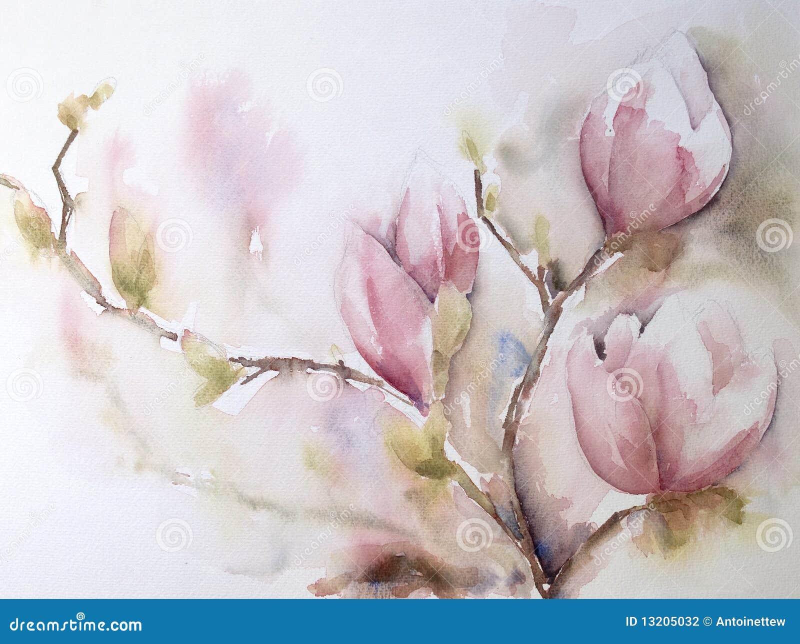 Aquarel oder Aquarell der Magnolie-Blumen