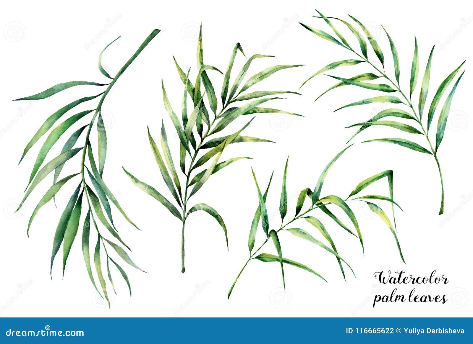 Aquarela ajustada com folhas de palmeira tropicais Ramo exótico das hortaliças pintados à mão do coco no fundo branco botanical