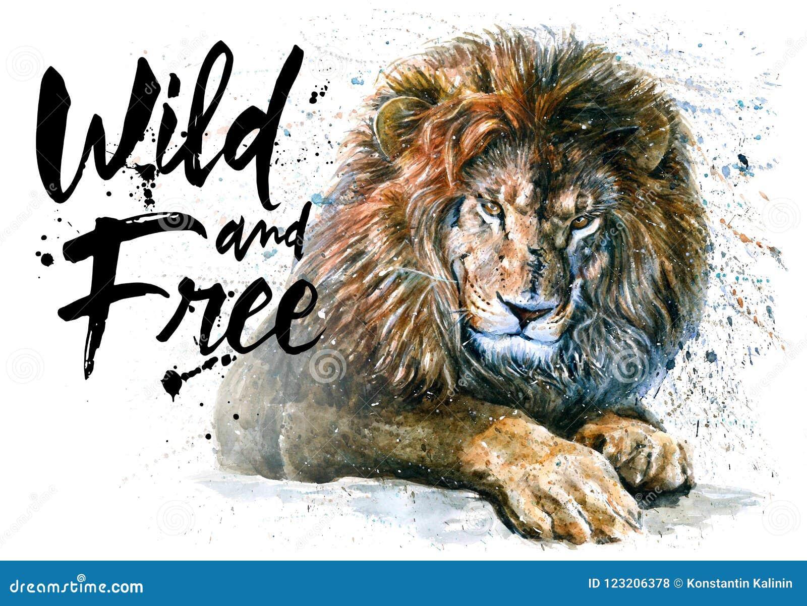 Aquarela do leão que pinta o rei predador dos animais dos animais selvagem & livre