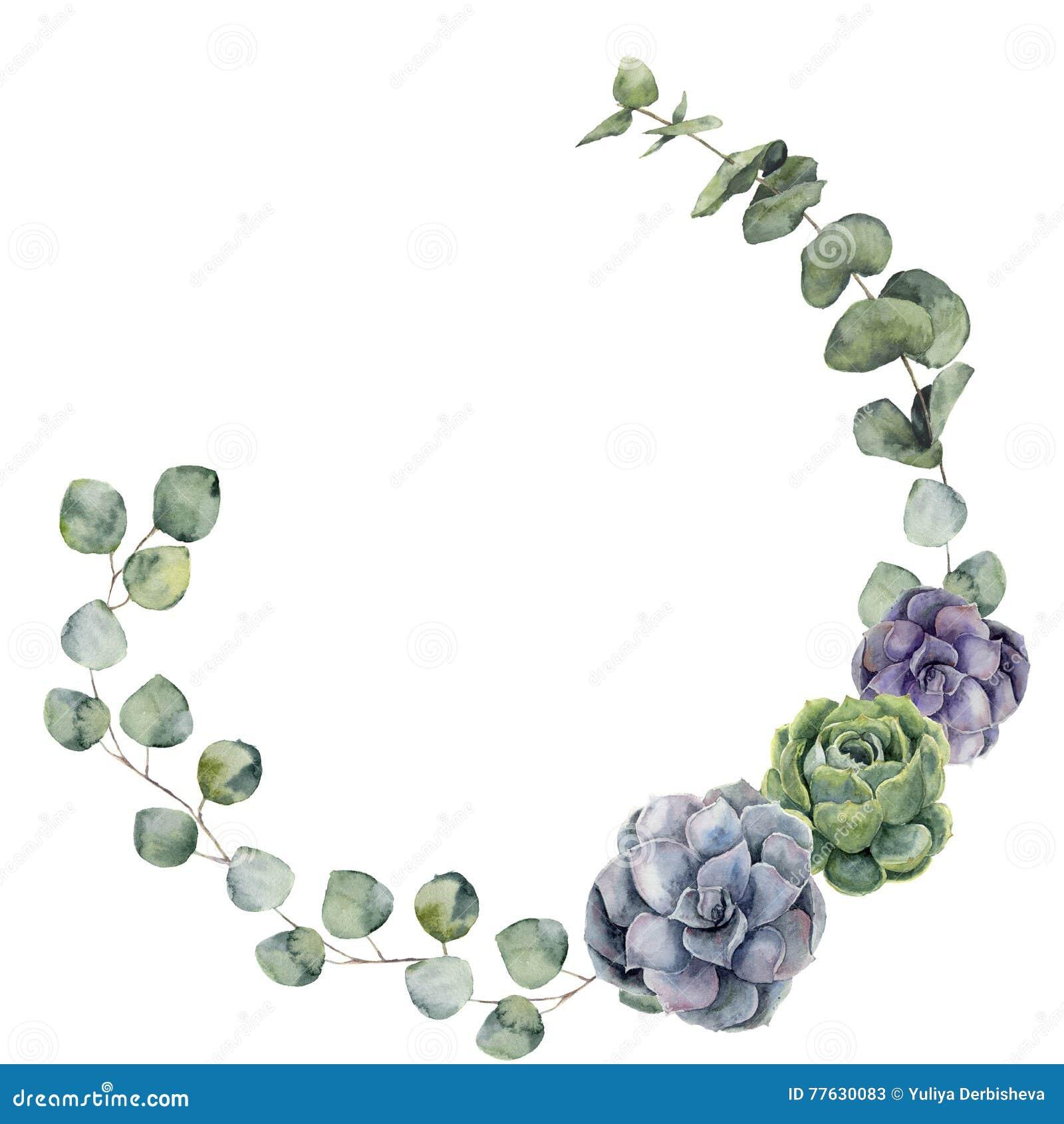 Aquarellblumengrenze mit Baby, Eukalyptus des silbernen Dollars verlässt und Succulent Handgemalter Blumenkranz mit Niederlassung