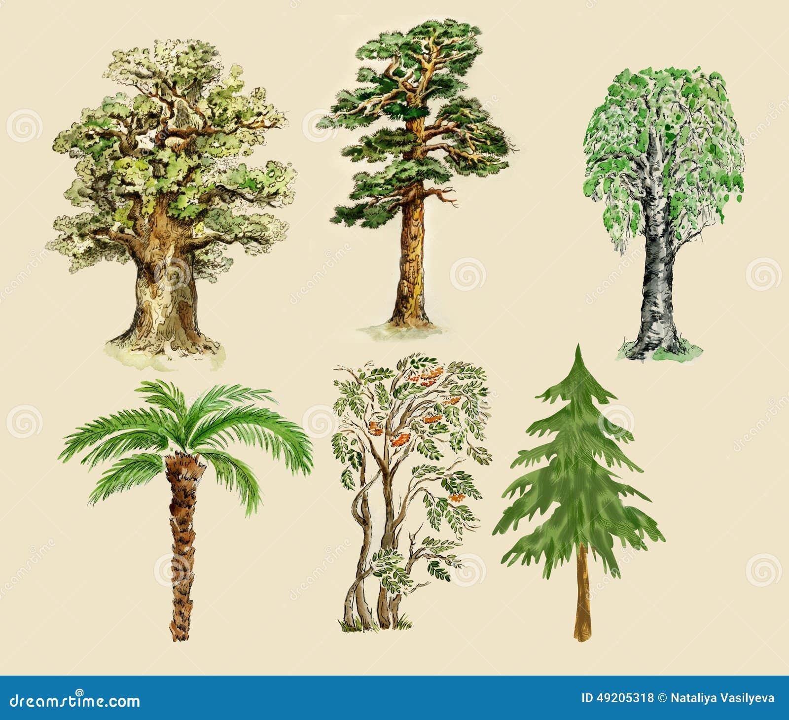 Aquarelle d illustration d arbres