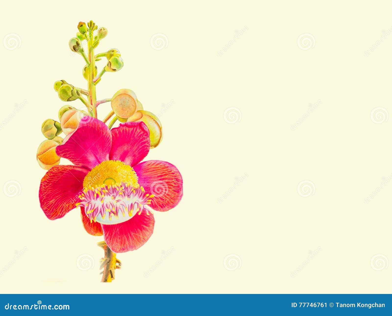 Peinture Fleur De Sel aquarelle de peinture colorée du bouquet de fleur de sel à l'arrière