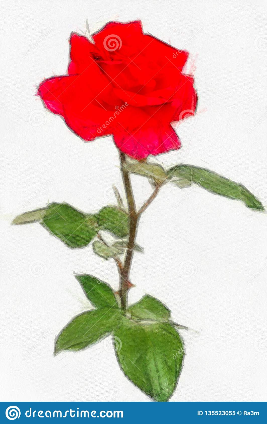 Aquarelle Dessinant Les Roses Rouges Illustration Stock