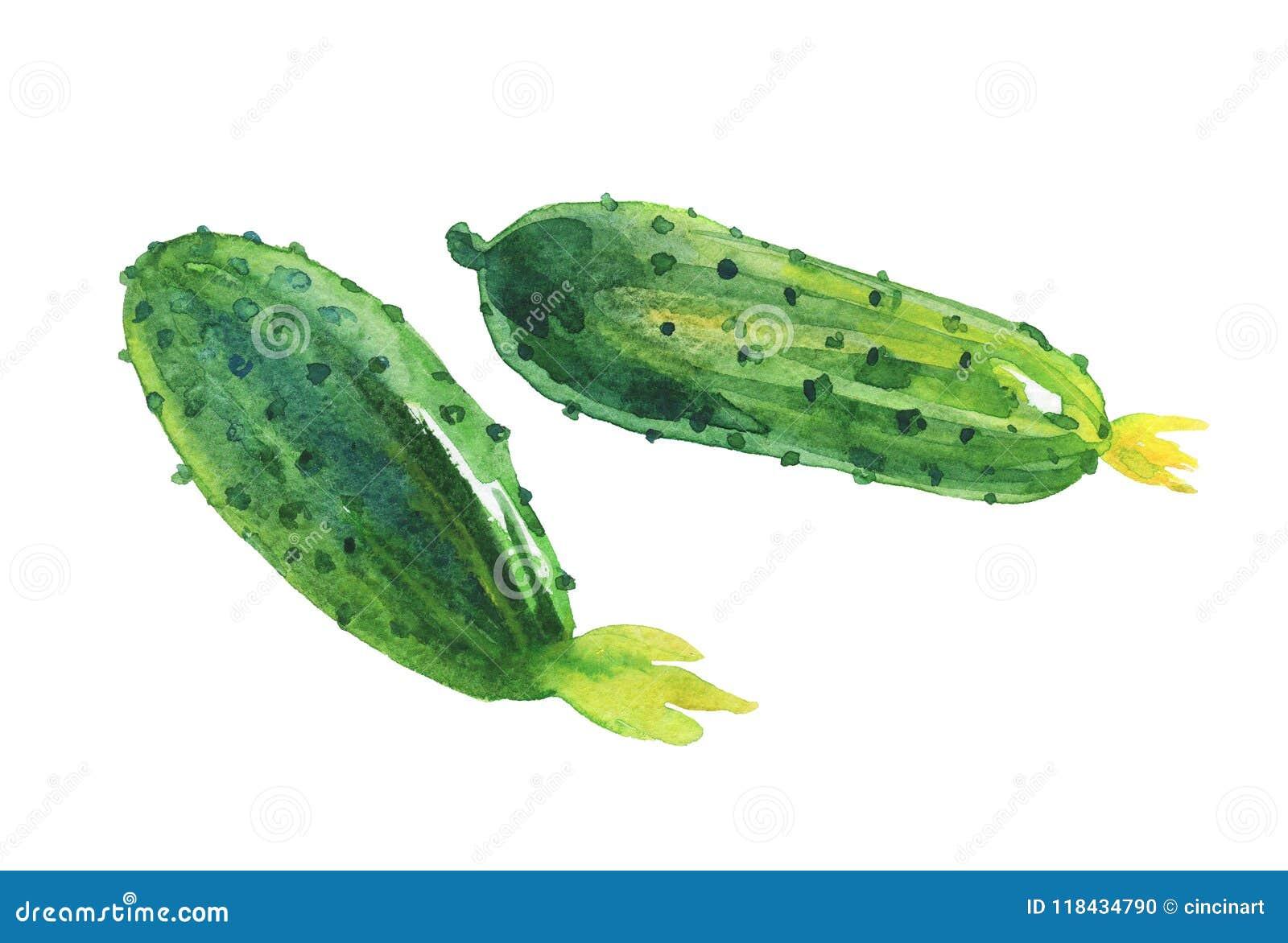 Aquarellgurken