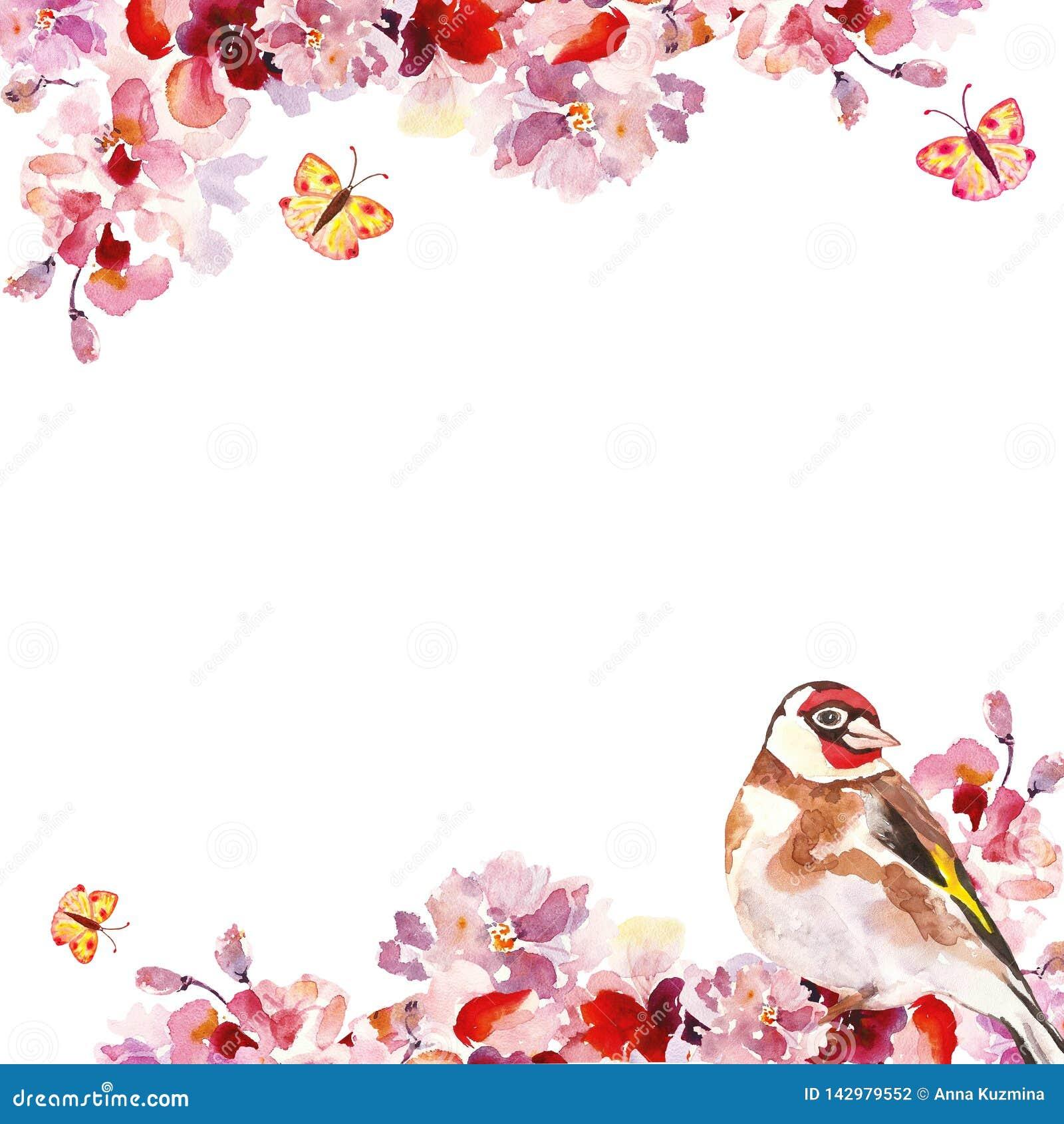 Aquarellhandrosa-Kirschblüte-Baumaste mit Vogel auf weißem Hintergrund Botanischer mit Blumenrahmen des Frühlinges