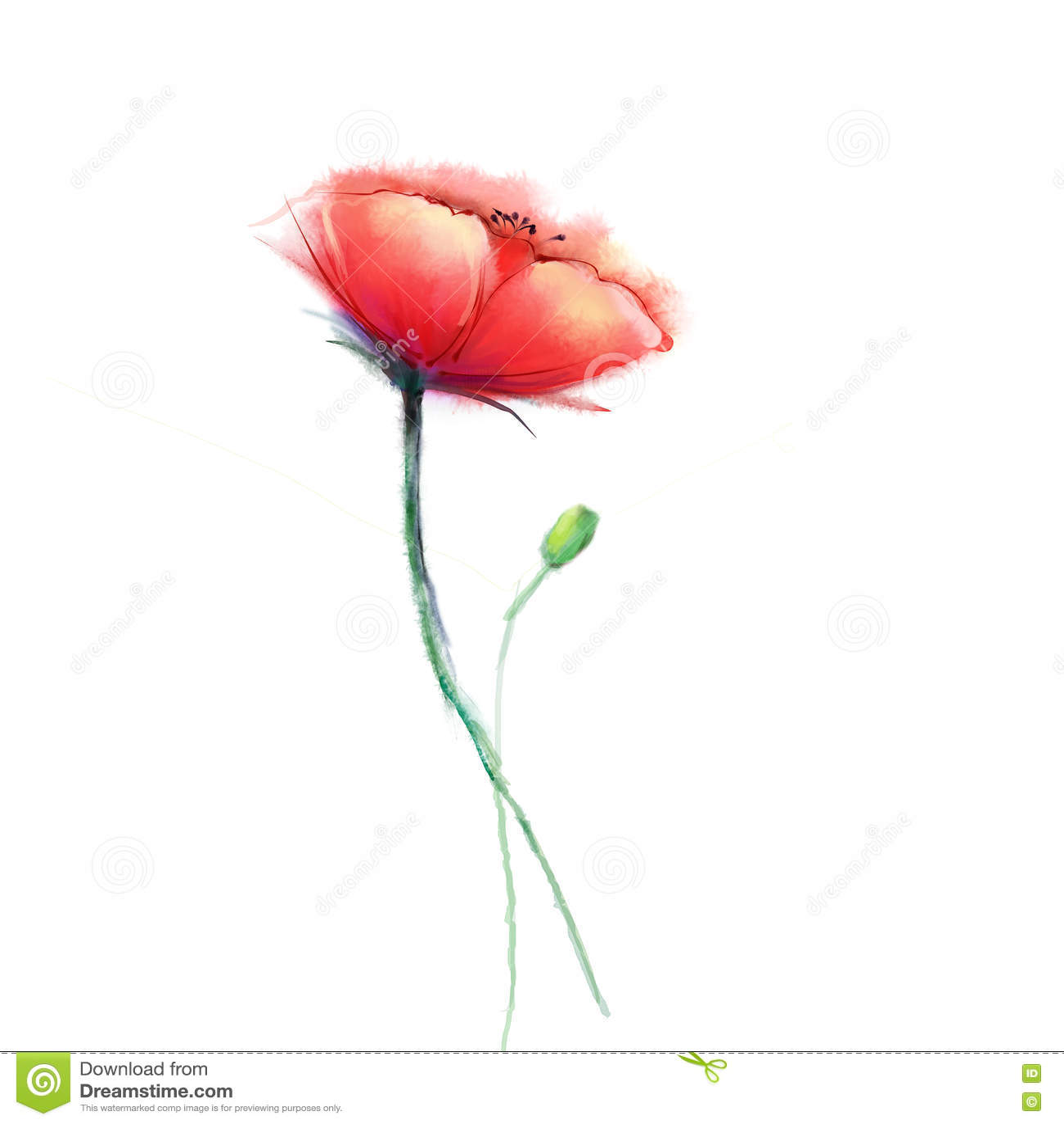 Aquarellmalerei-Mohnblumenblume Lokalisierte Blumen auf Weißbuchhintergrund