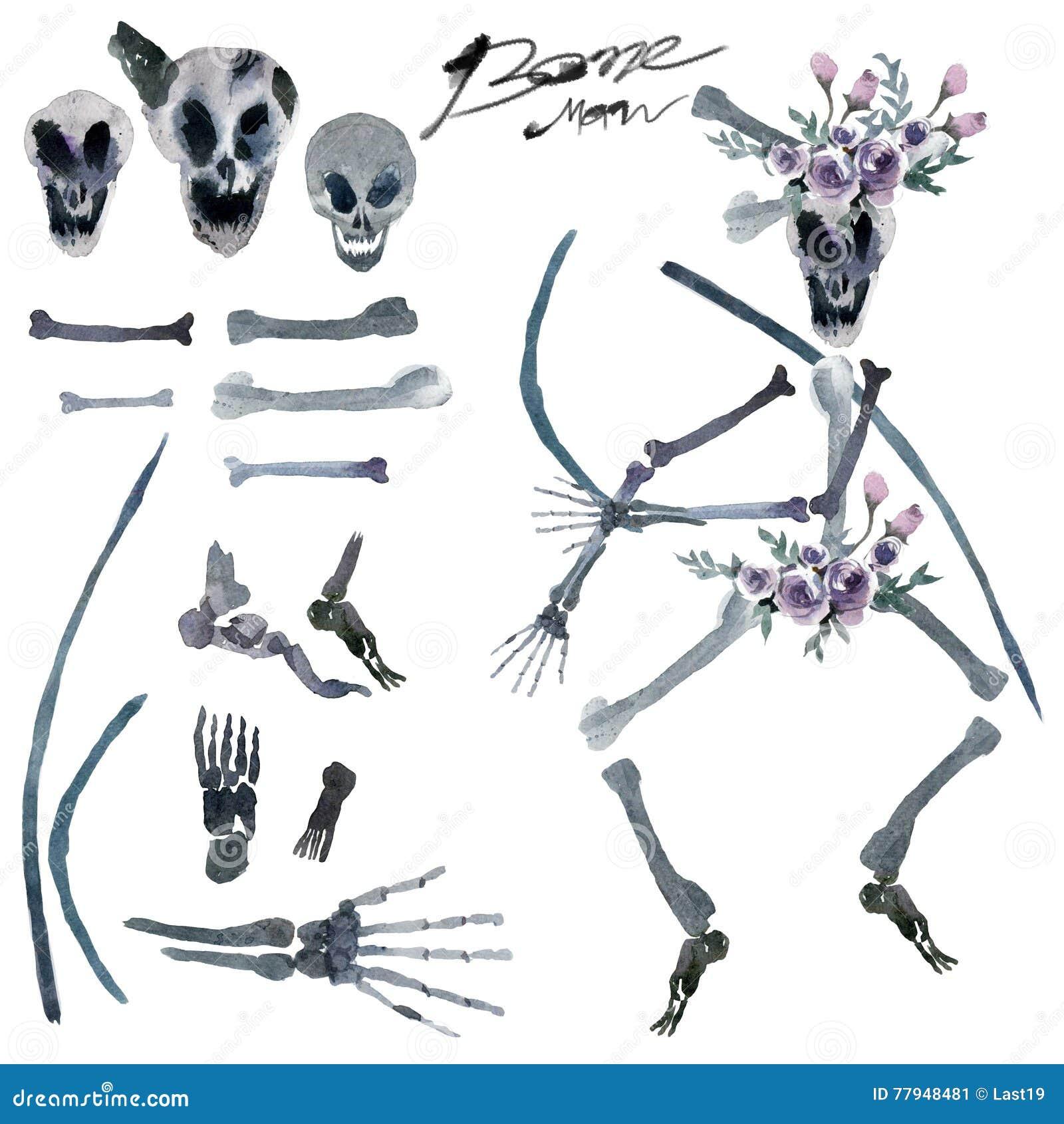 Aquarellmalerei in Stücke menschliche Knochen