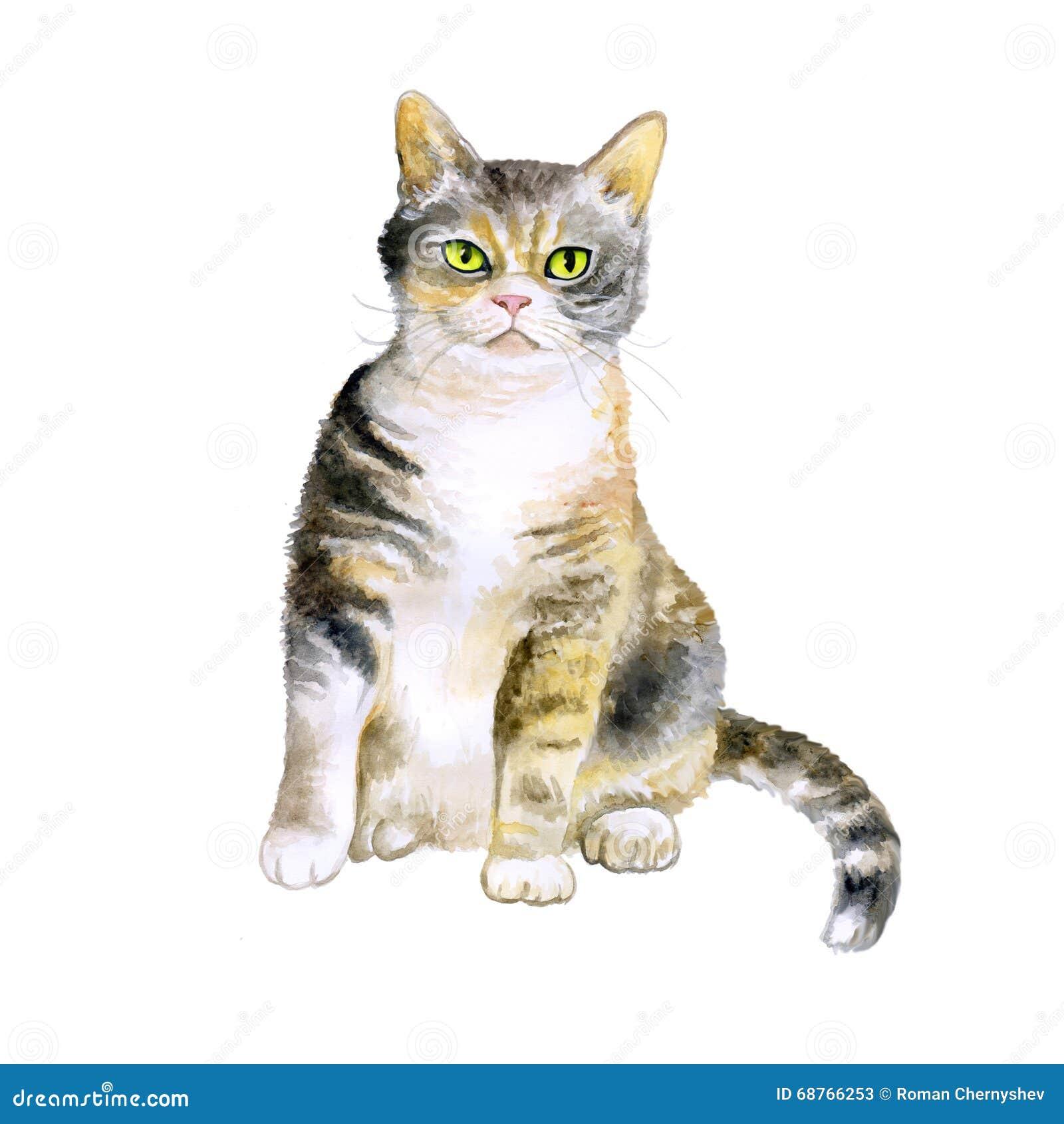 Charmant Katze 6 Drahtkonfiguration Bilder - Schaltplan Serie ...