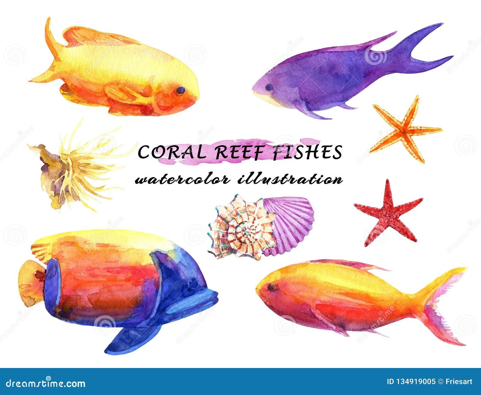 Aquarellsatz bunte Rifffische, weiche Koralle, Starfish und Mollusken